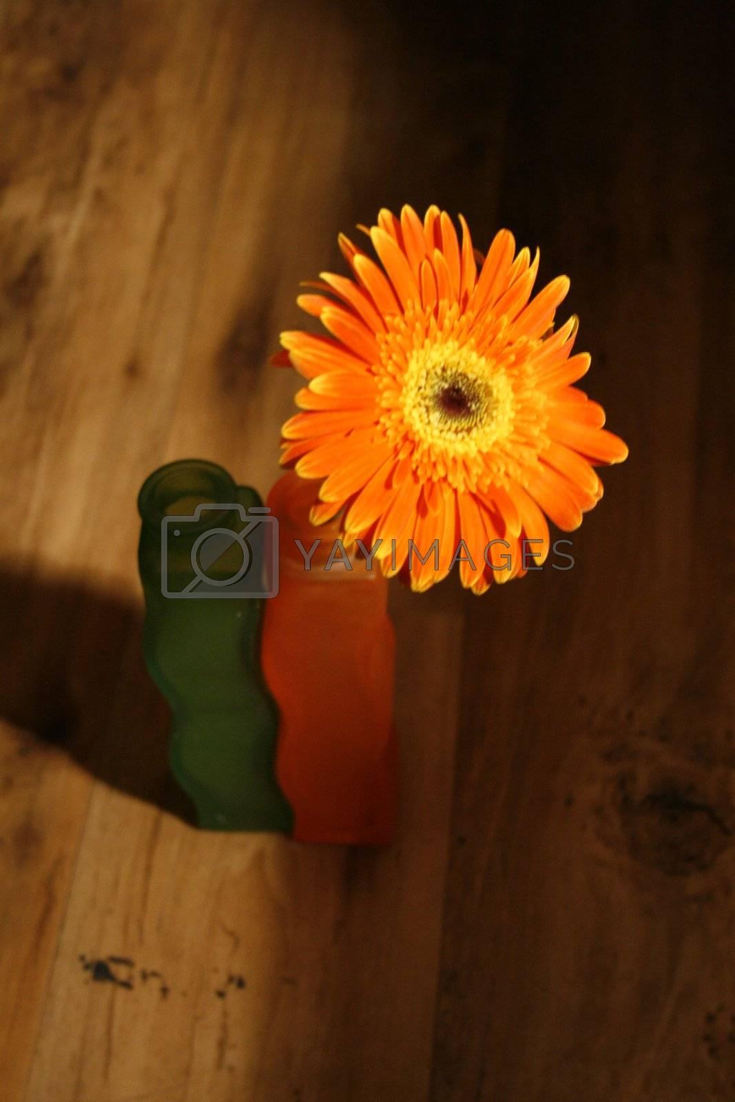 Orange flower and two vases on brown floor