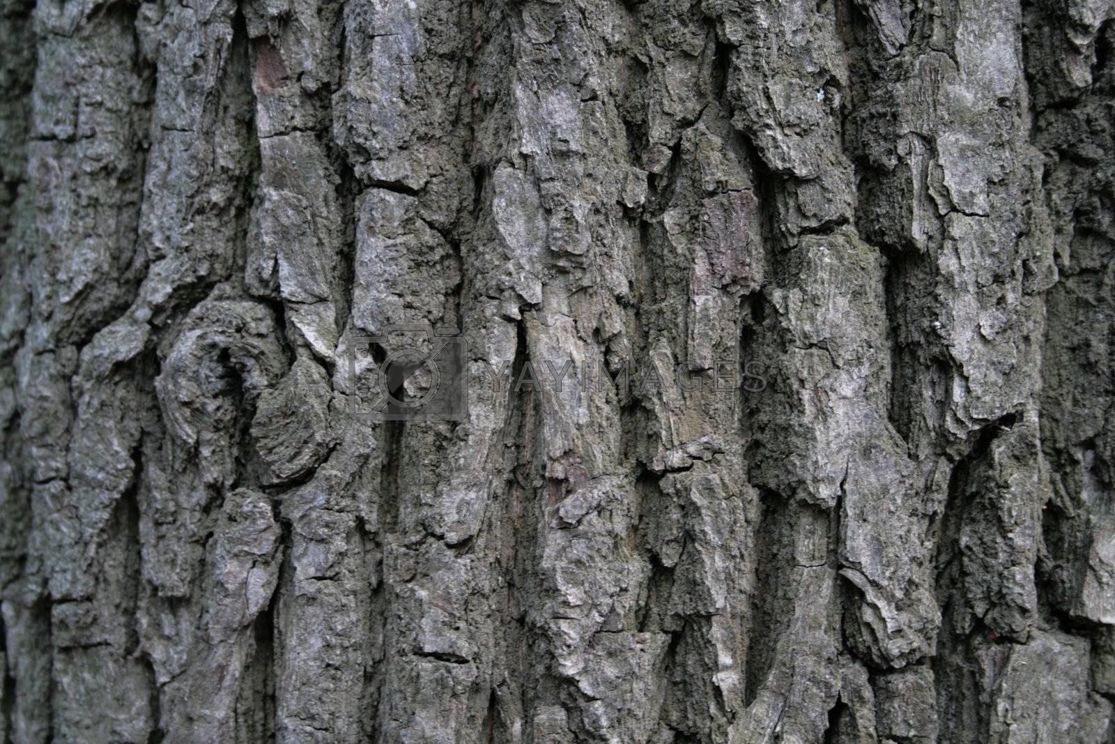 close-up of ald tree bark