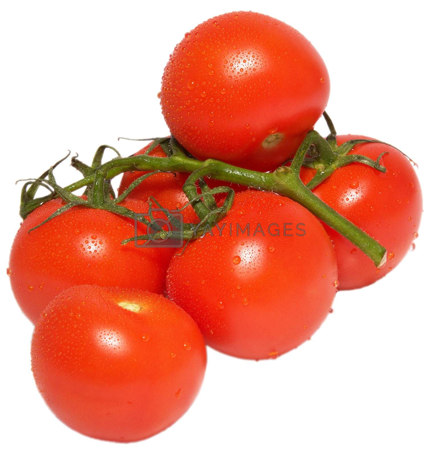 A brach of tomatos, with drops
