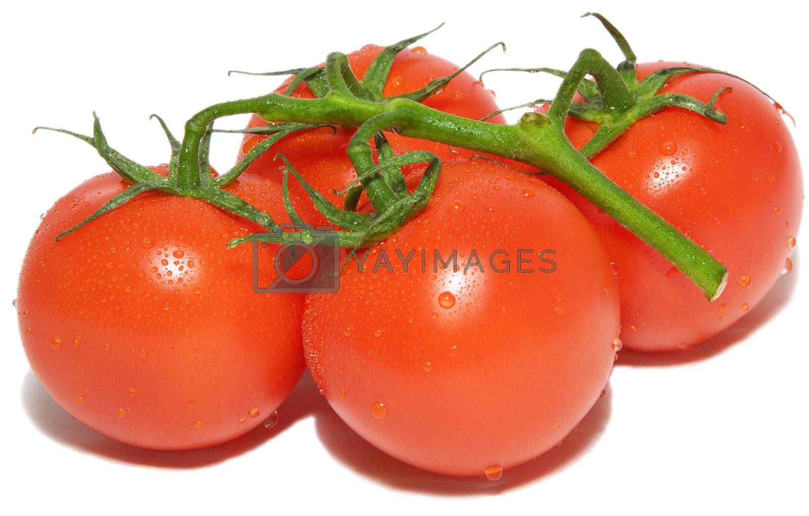 A branch of fresh tomatos, with drops