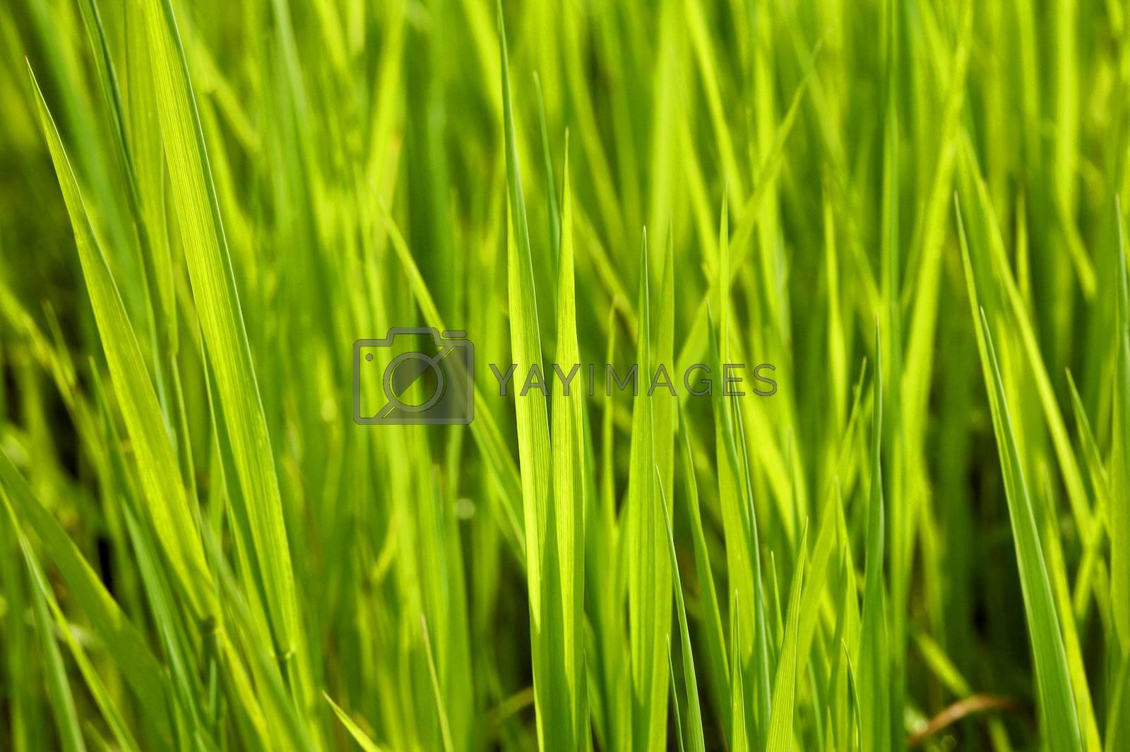 A close up green grass