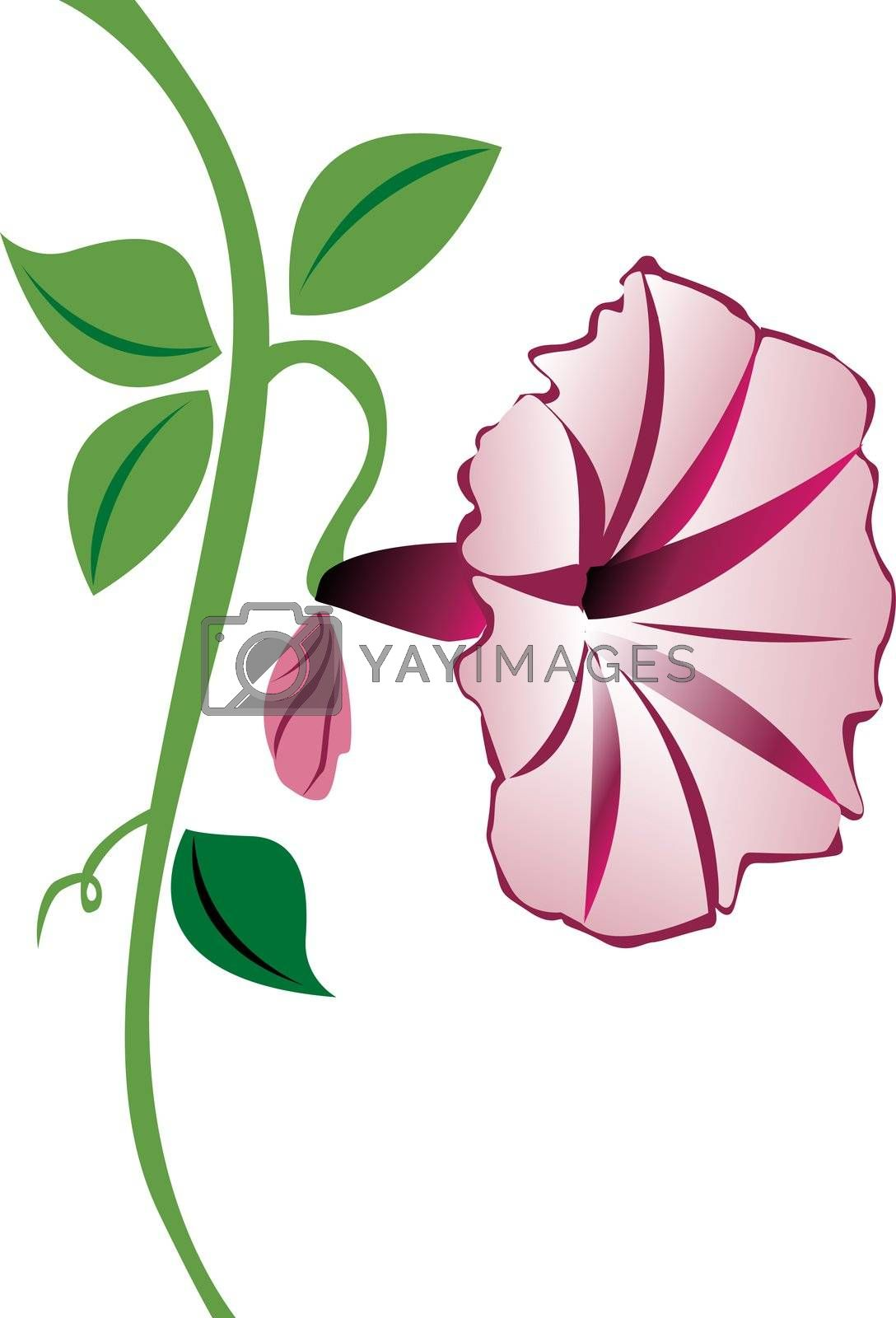 A pink morning glory flower with leaves and a bud.