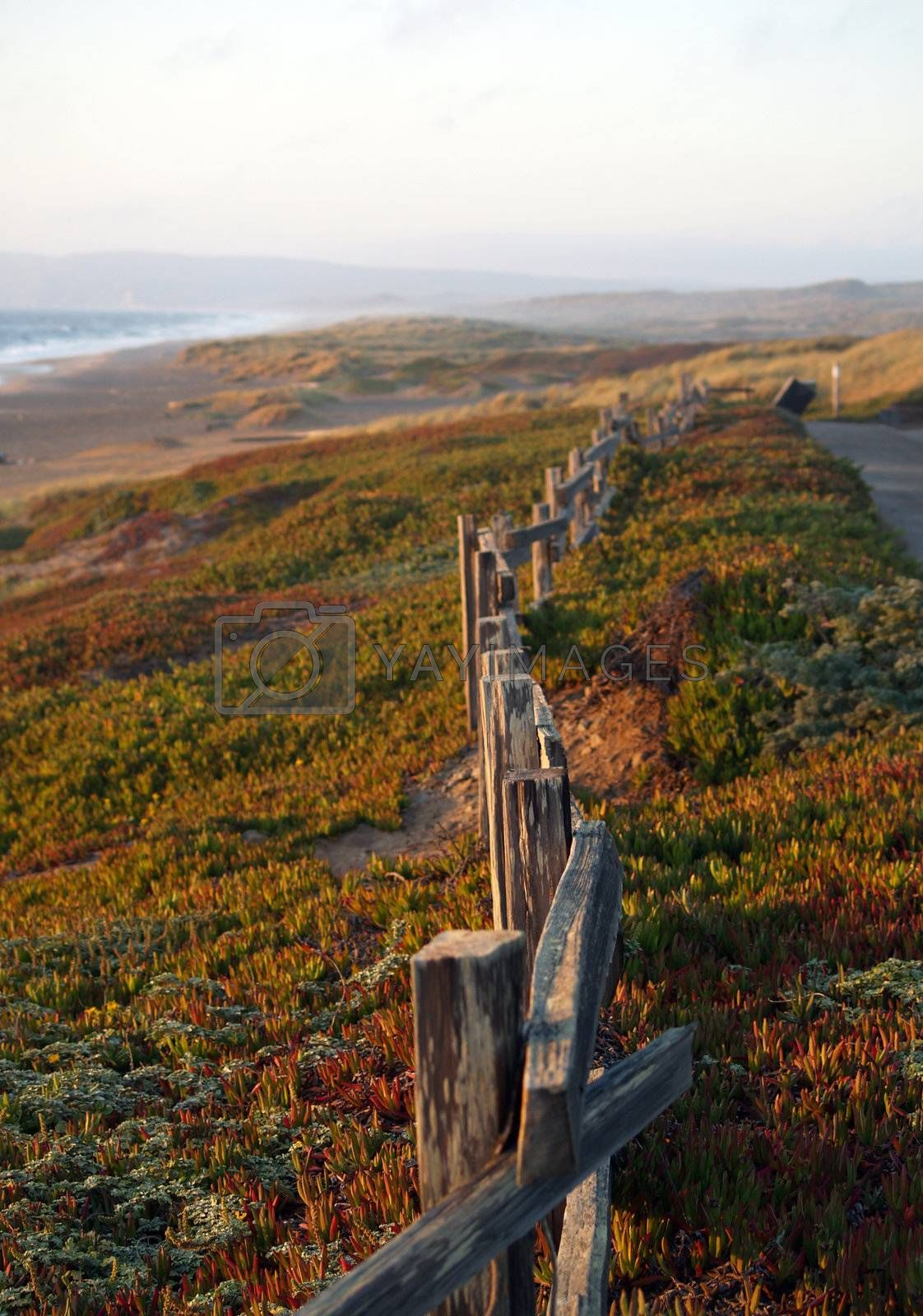 ice plant with wooden fence at beach