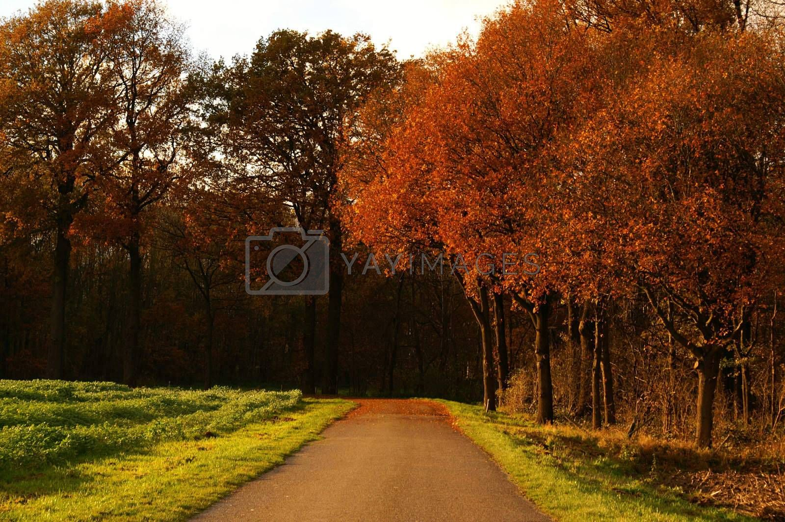 rural autumn landscape with trees and pasture on the side