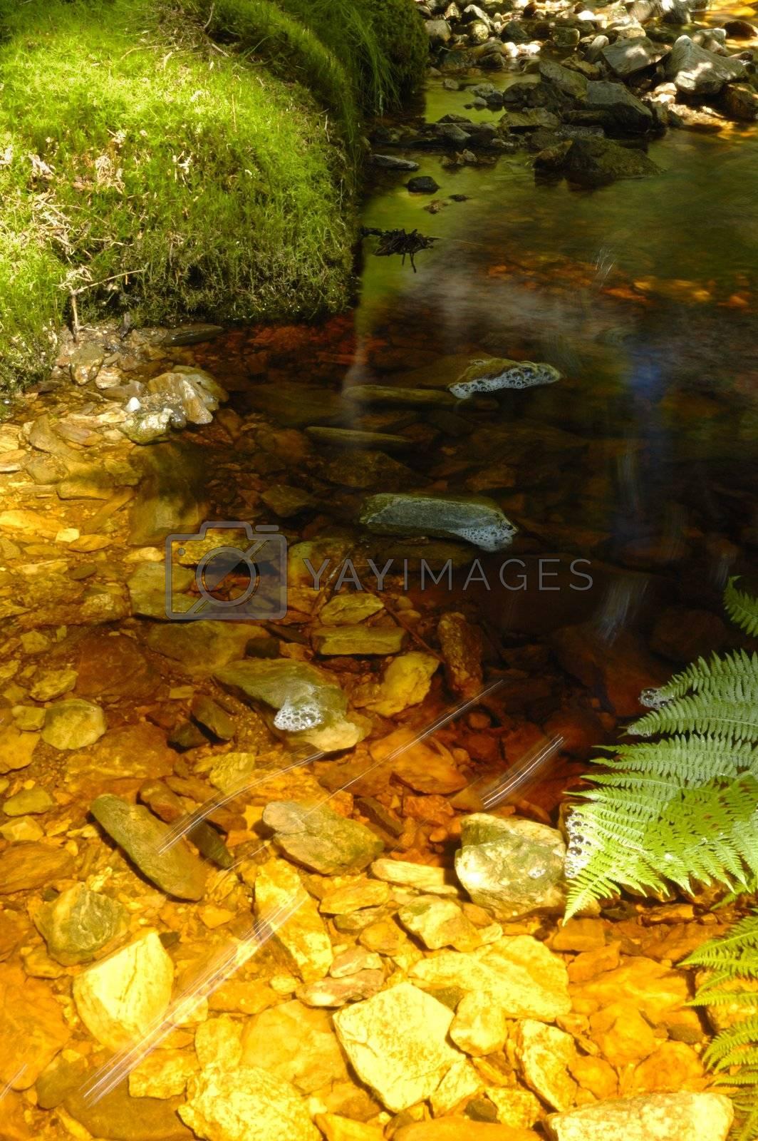 brook in czech mountain, verically framed shot
