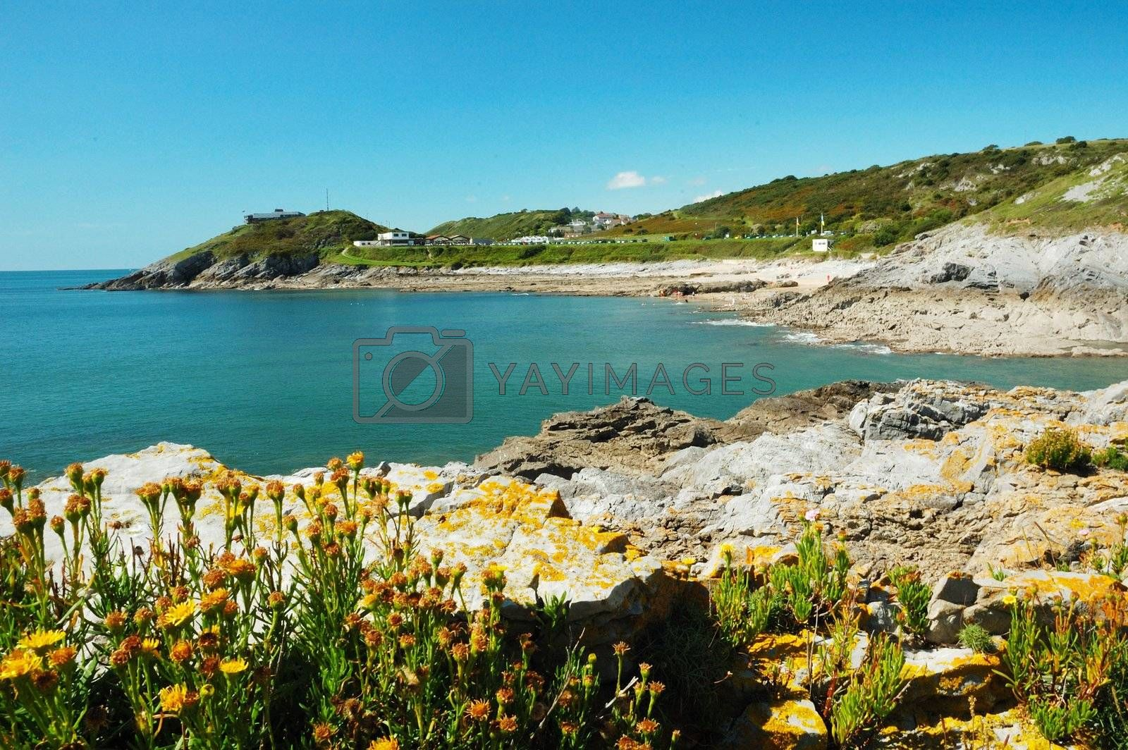 coast of Swansea in Wales with rock, sea, plants and sky