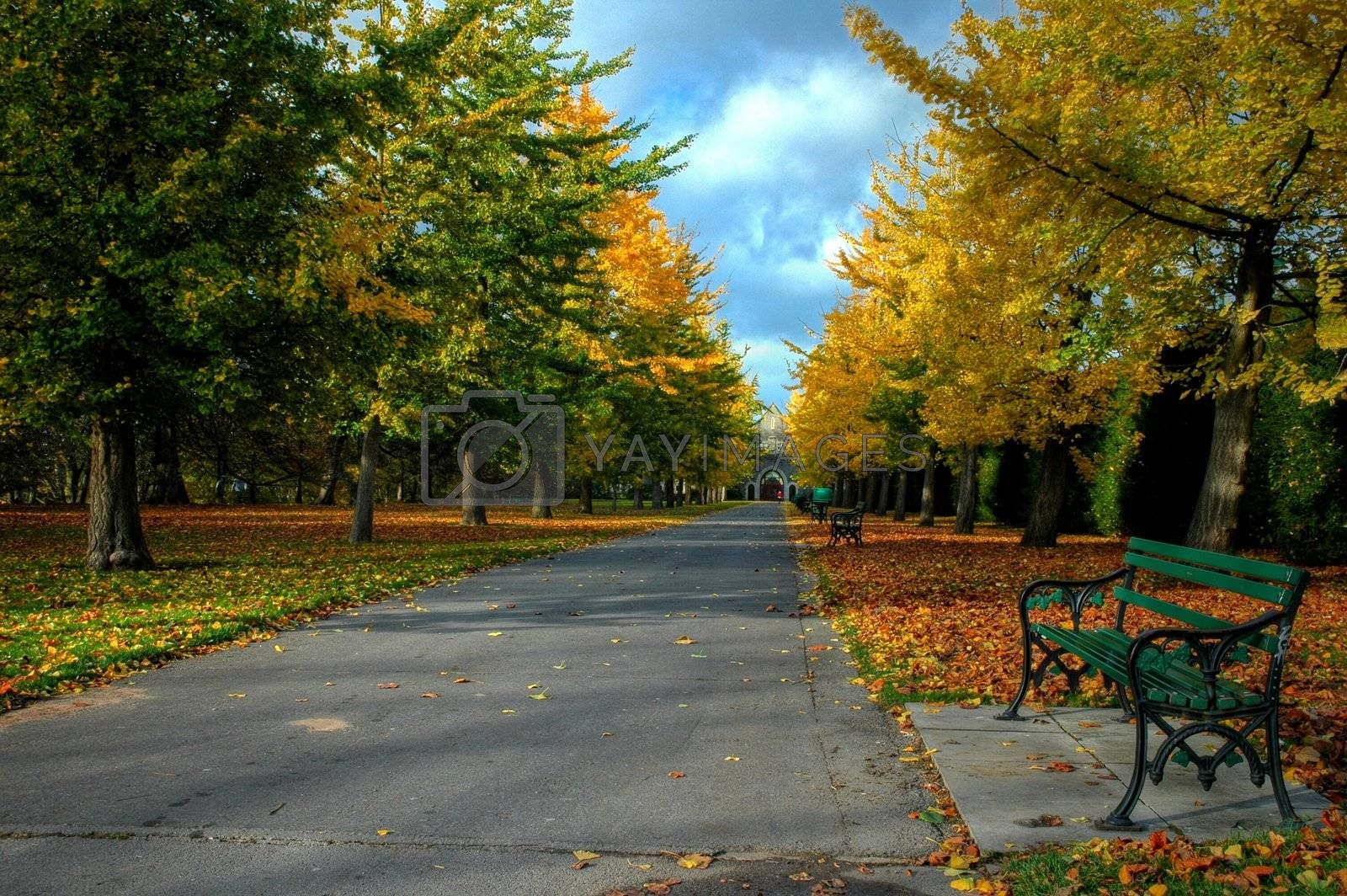 bute park in cardiff with beautiful autumn colours of trees and bench