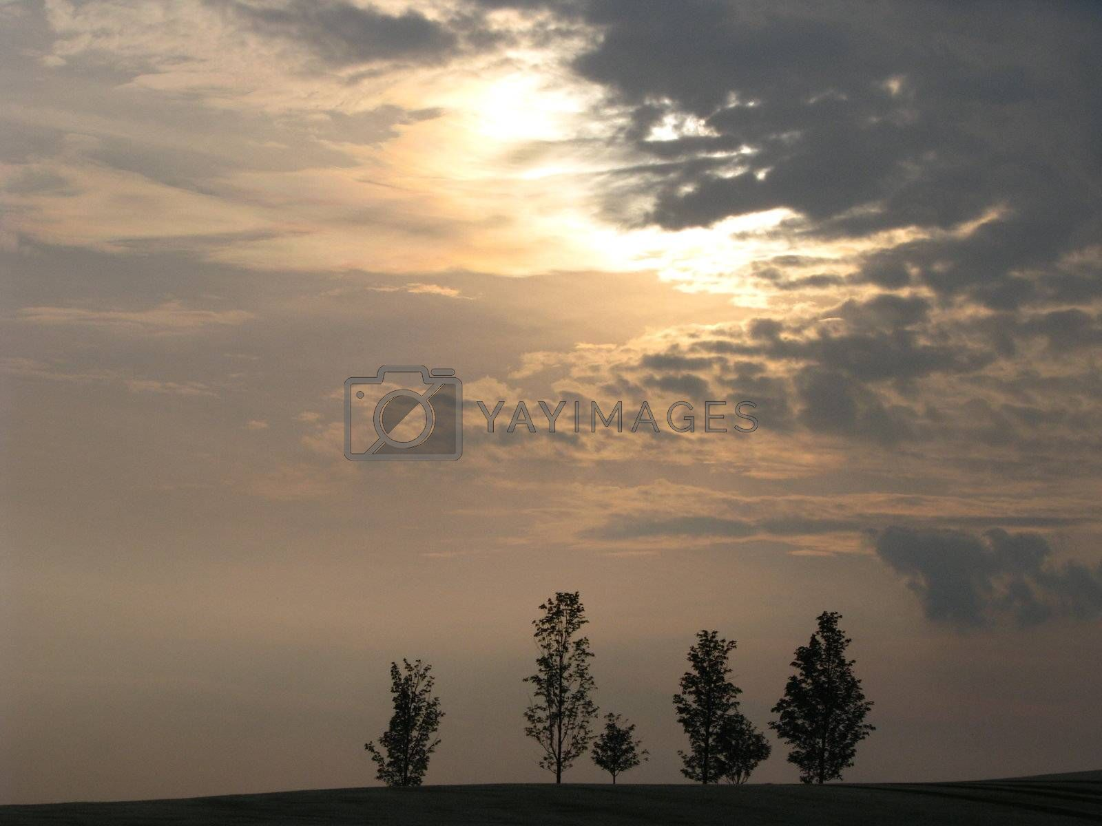 Royalty free image of Trees by ewilliamsdesign