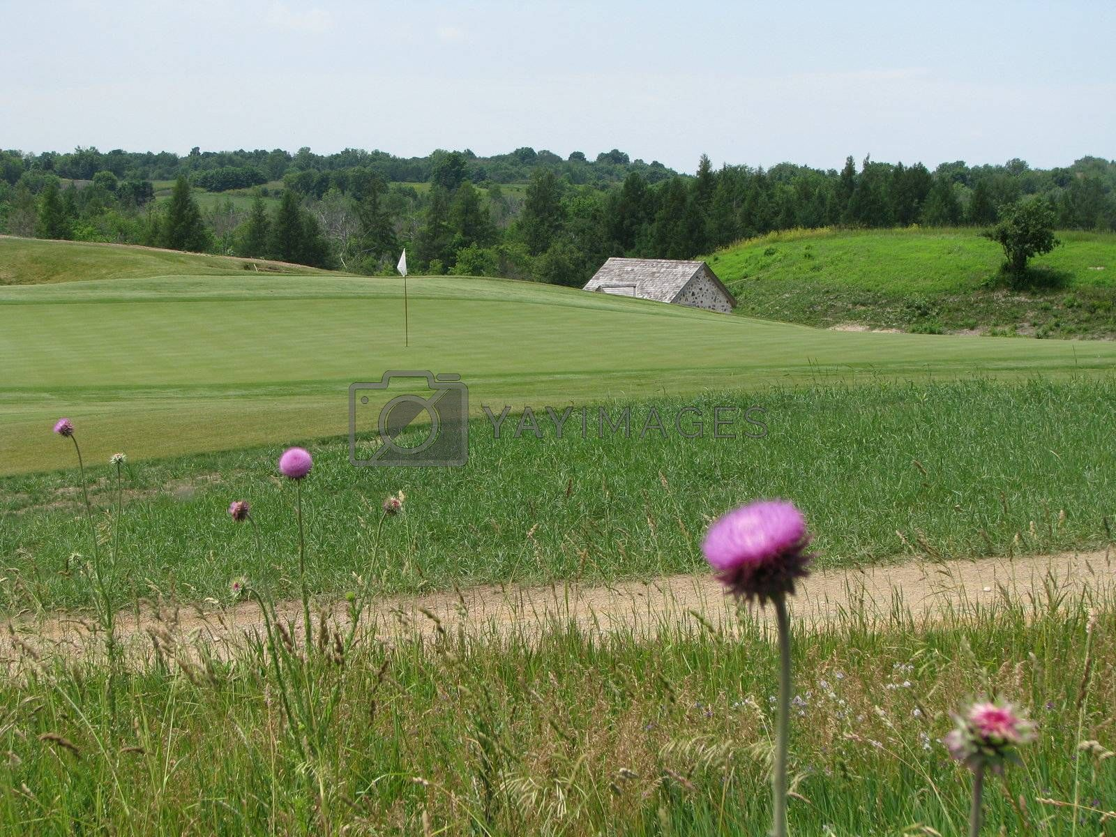 Thistle on golf course