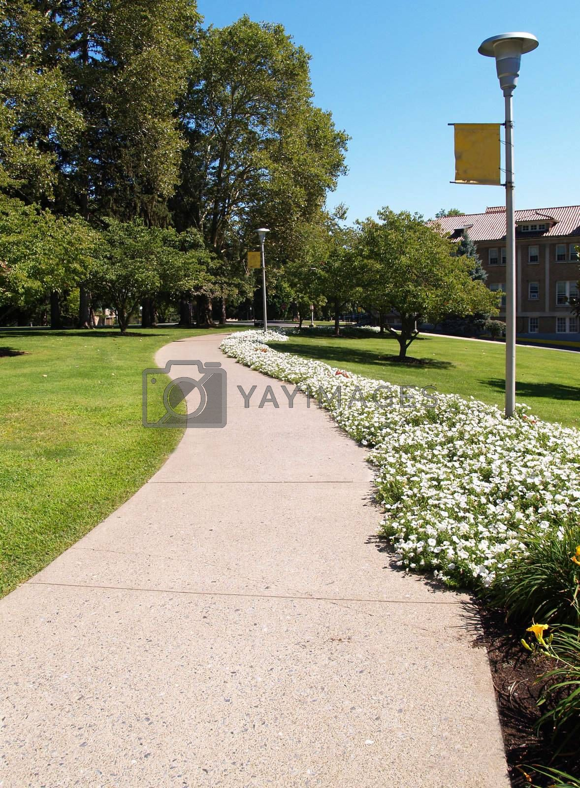 Royalty free image of curving sidewalk on a college campus by cfarmer