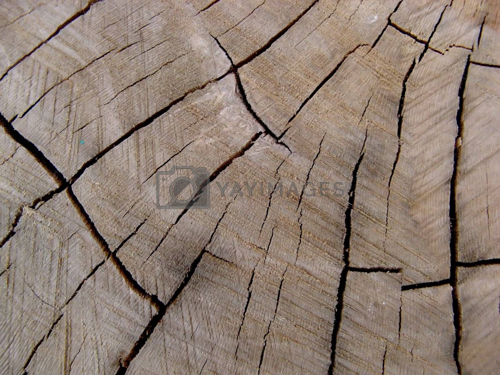 wood texture by jbouzou