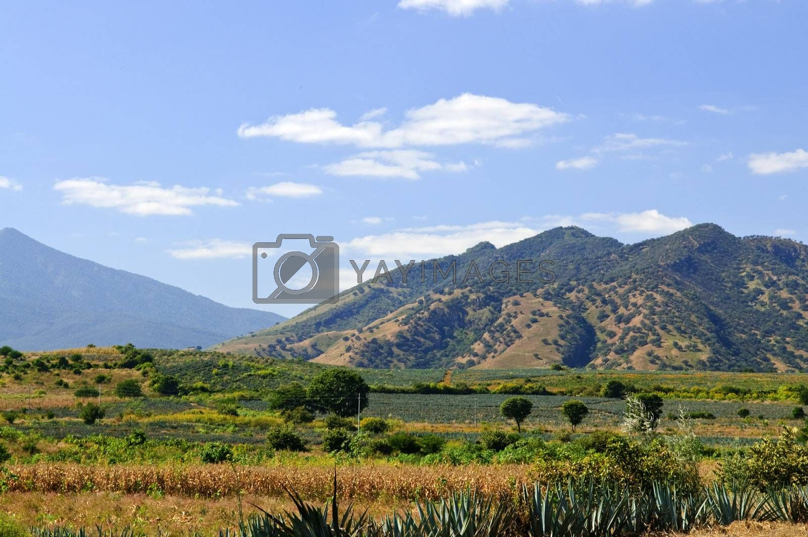 Royalty free image of Landscape in Jalisco,  Mexico by elenathewise
