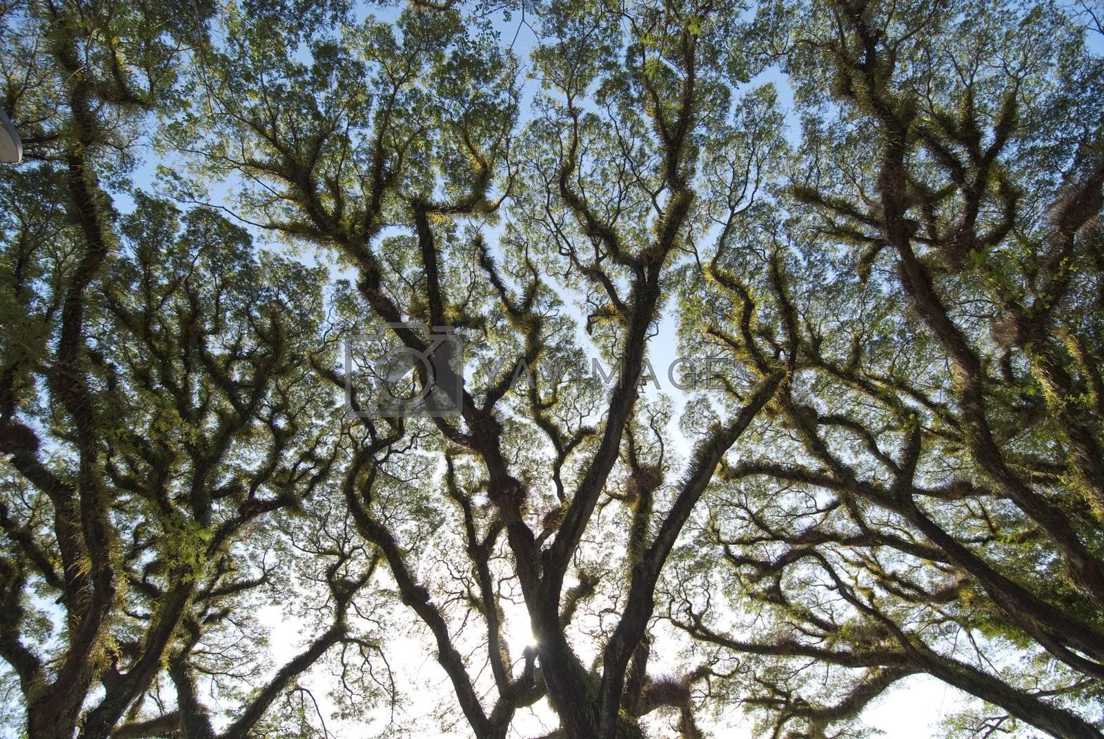 Detail of Daintree National Park, Queensland, Australia by jovannig