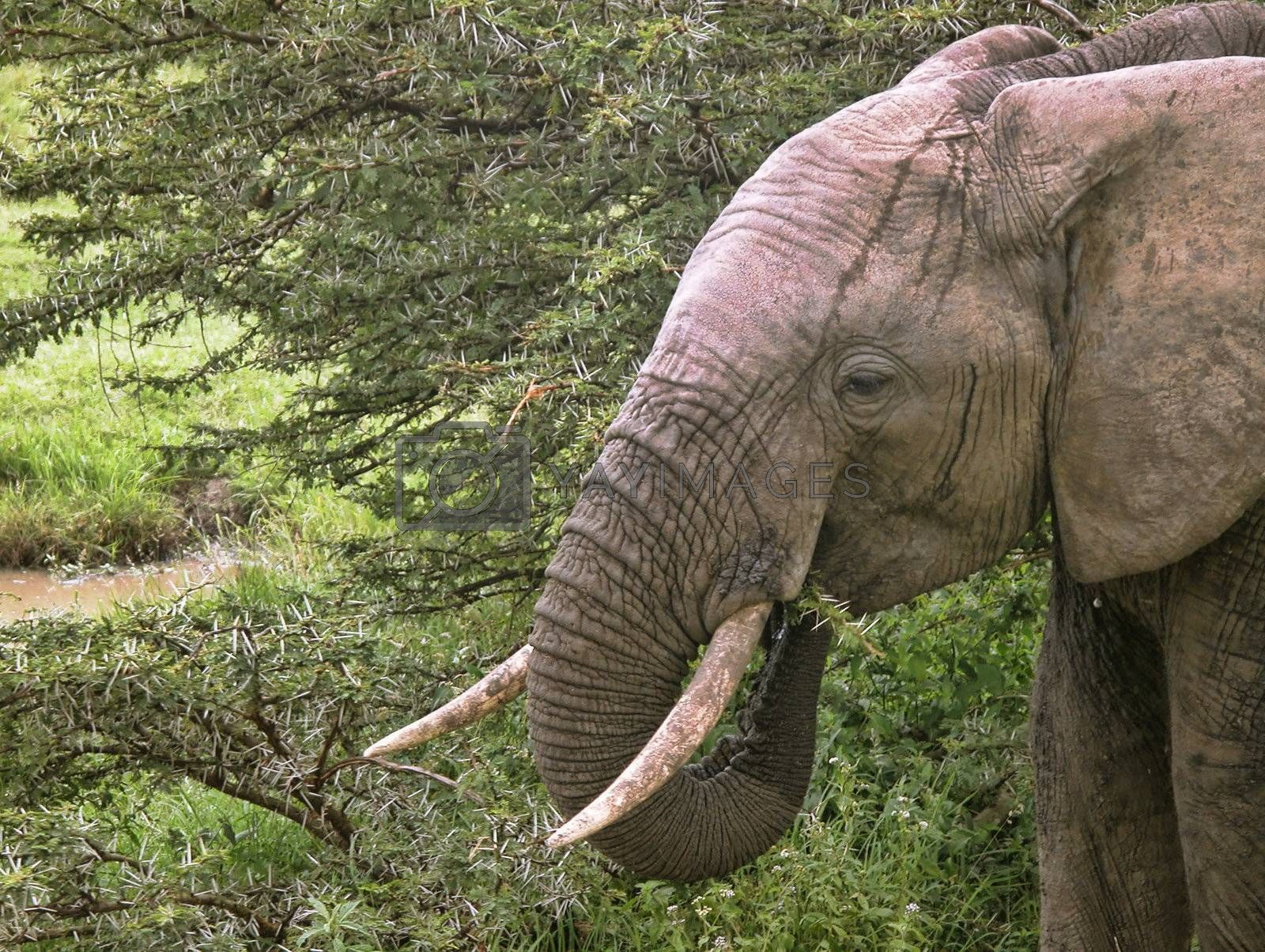 Detail of Kenya, Africa during Spring 2005 by jovannig