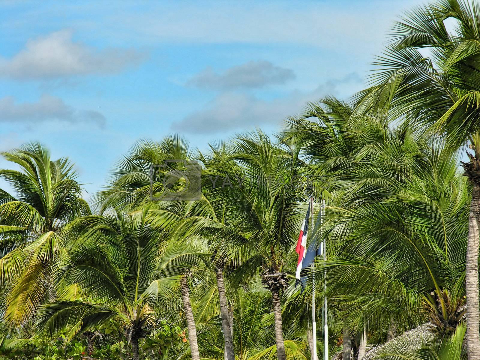 Coast of Santo Domingo, Dominican Republic by jovannig