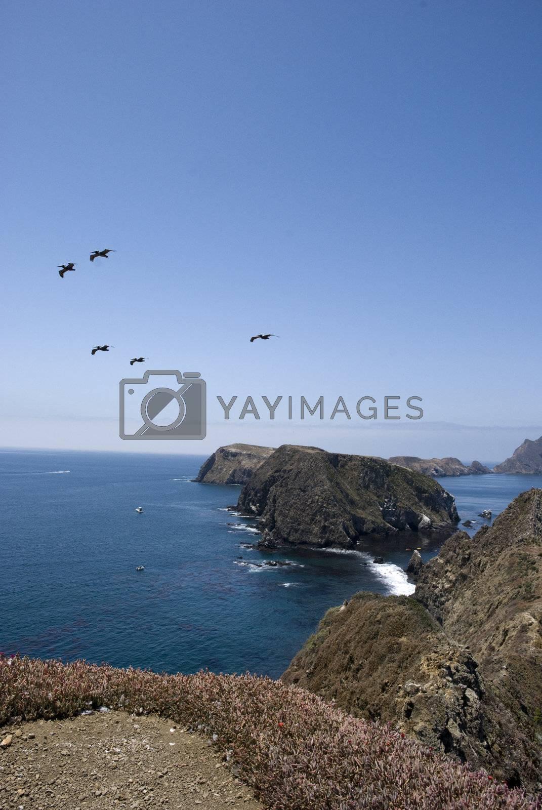 Paradise by omairkha