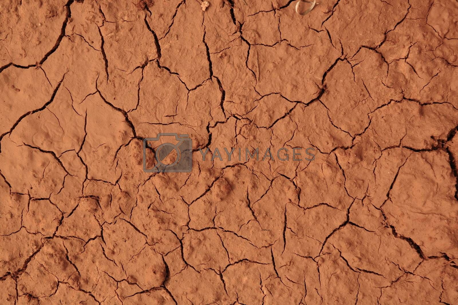 Royalty free image of dried land by leungchopan