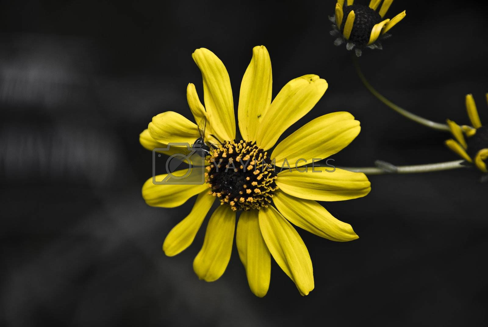Royalty free image of Yellow by omairkha