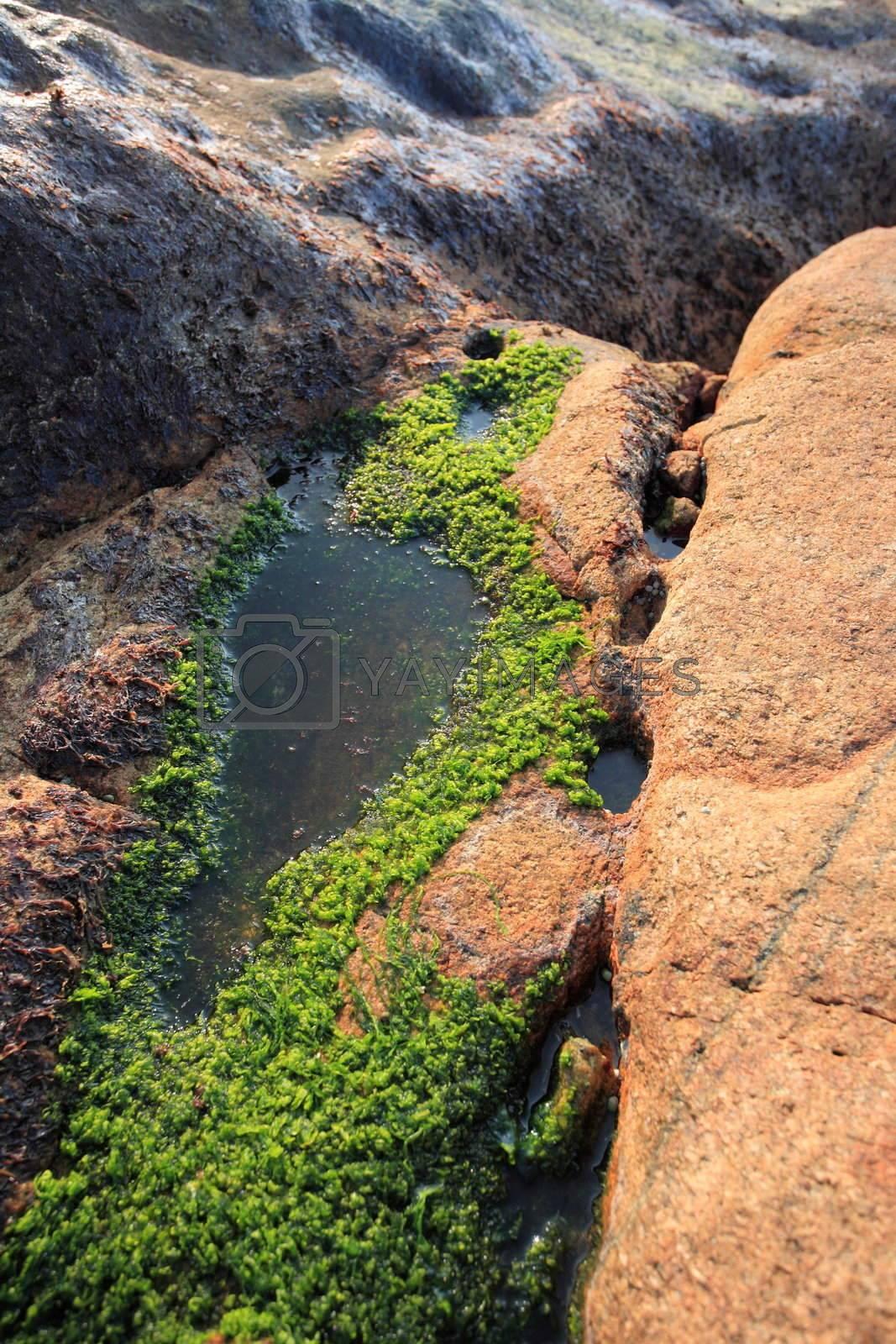 moss on rock by leungchopan