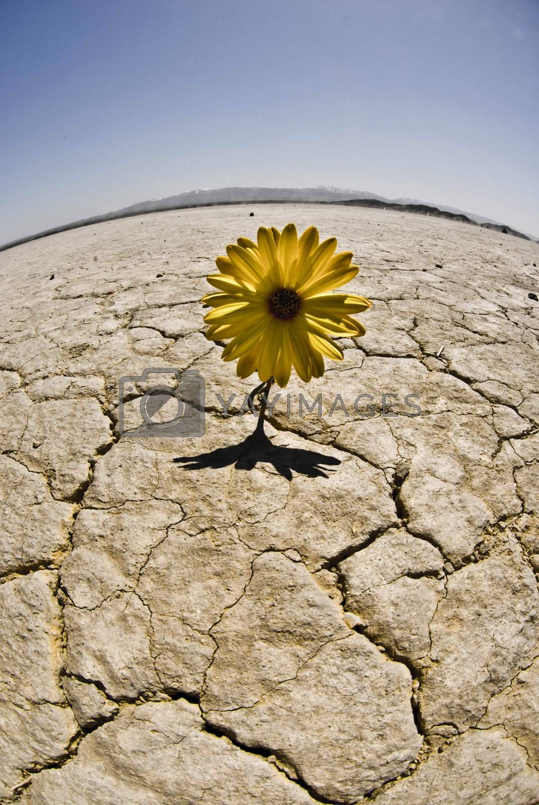 Flower grows in a dried lake bed