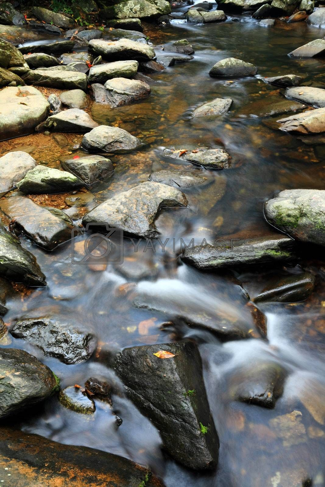 Royalty free image of water spring in forest by leungchopan