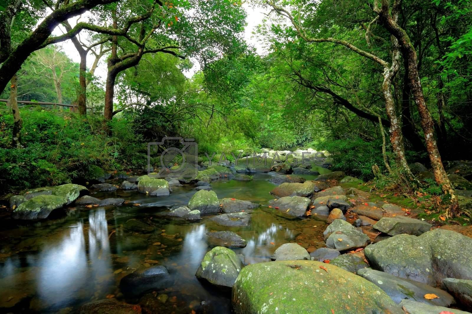 water spring in forest by leungchopan