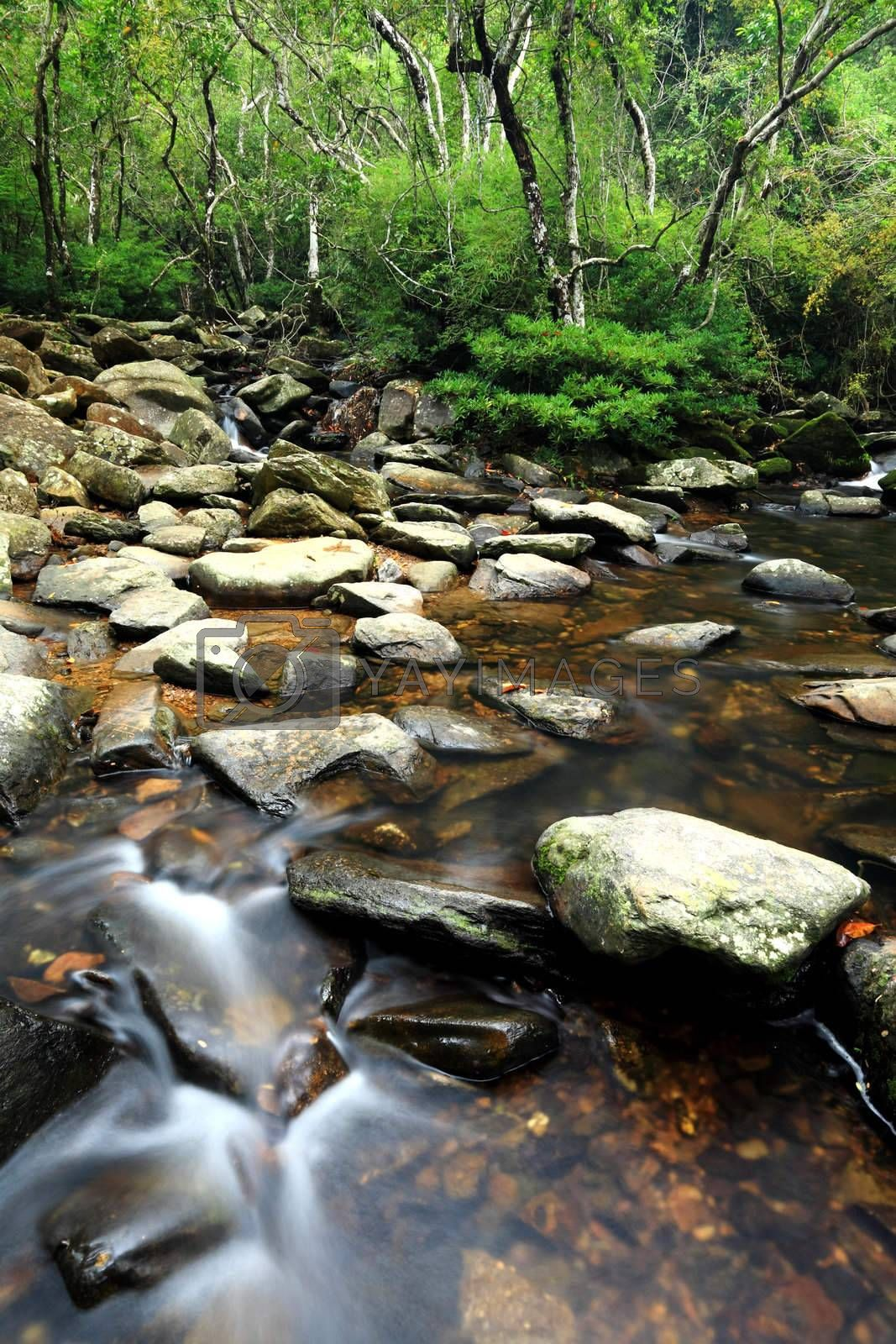 Royalty free image of beautiful water spring in forest by leungchopan