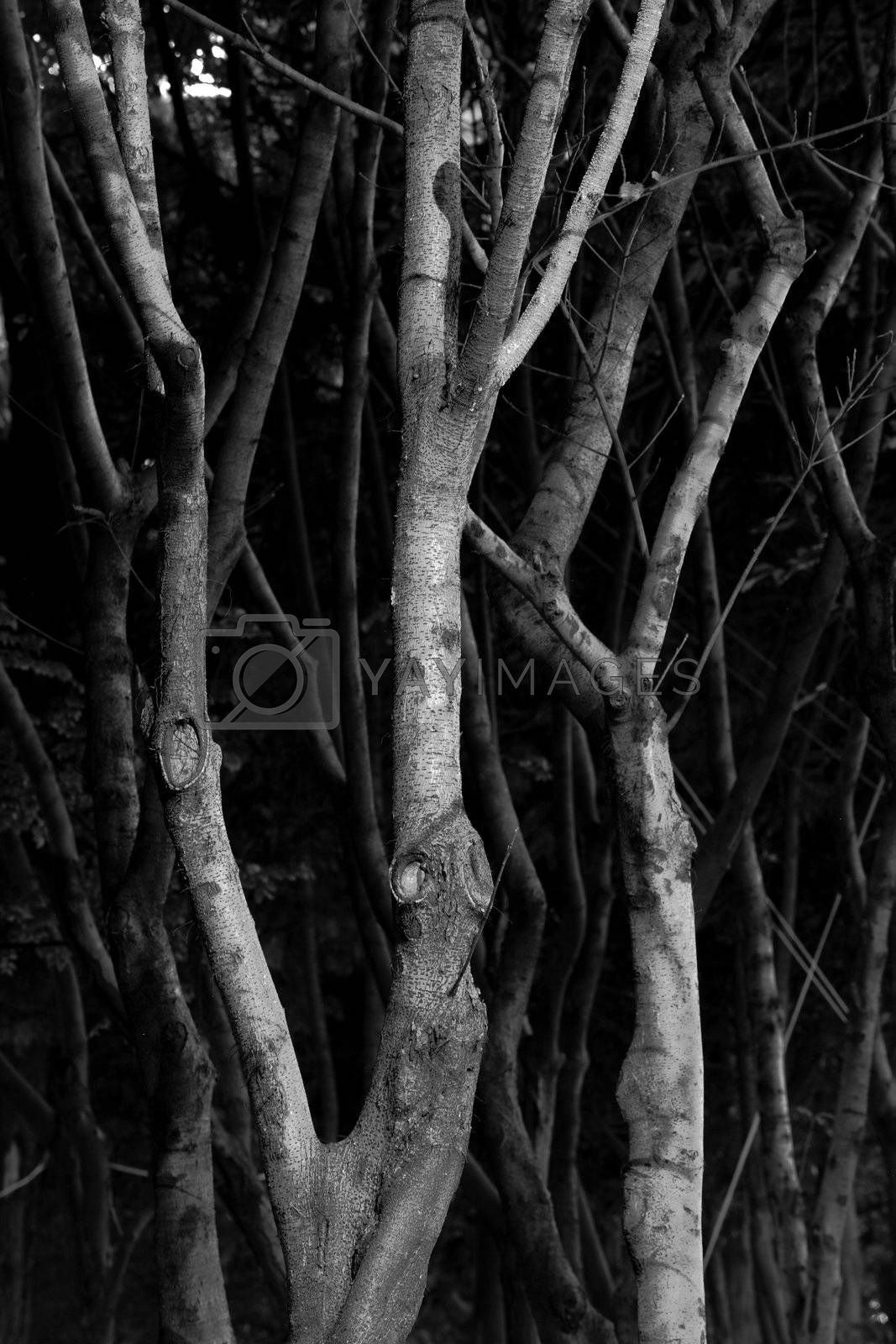 Royalty free image of branch background, sadness tone by leungchopan