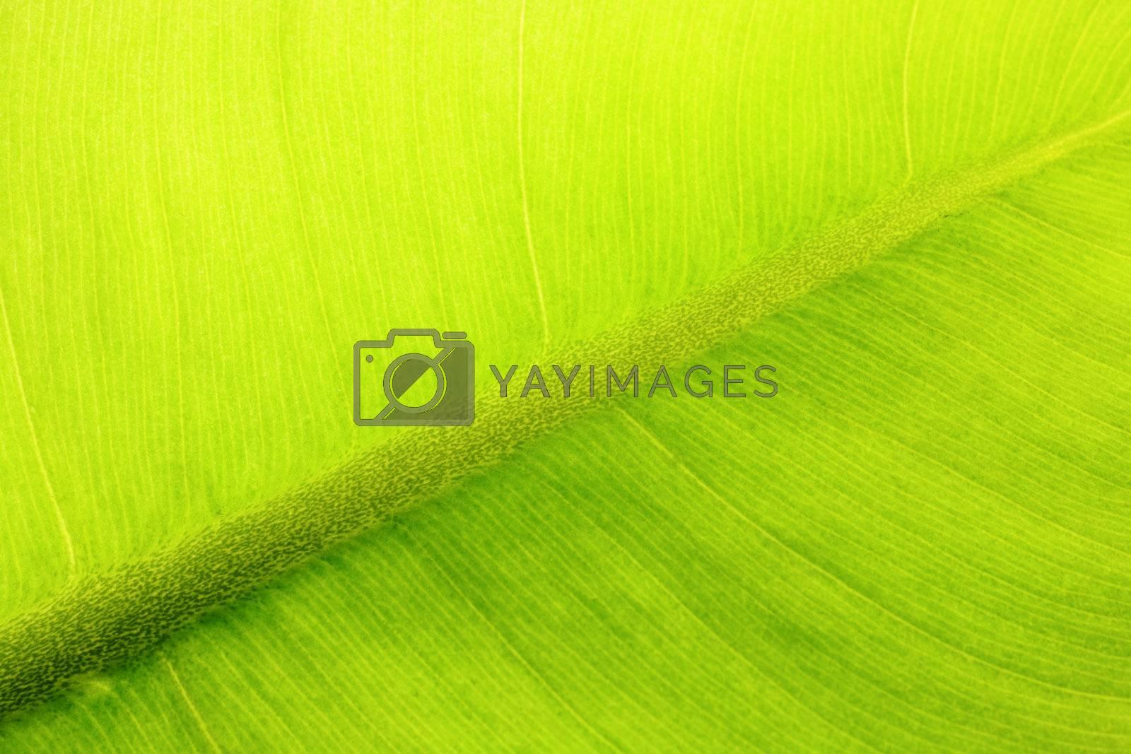leaf background by leungchopan
