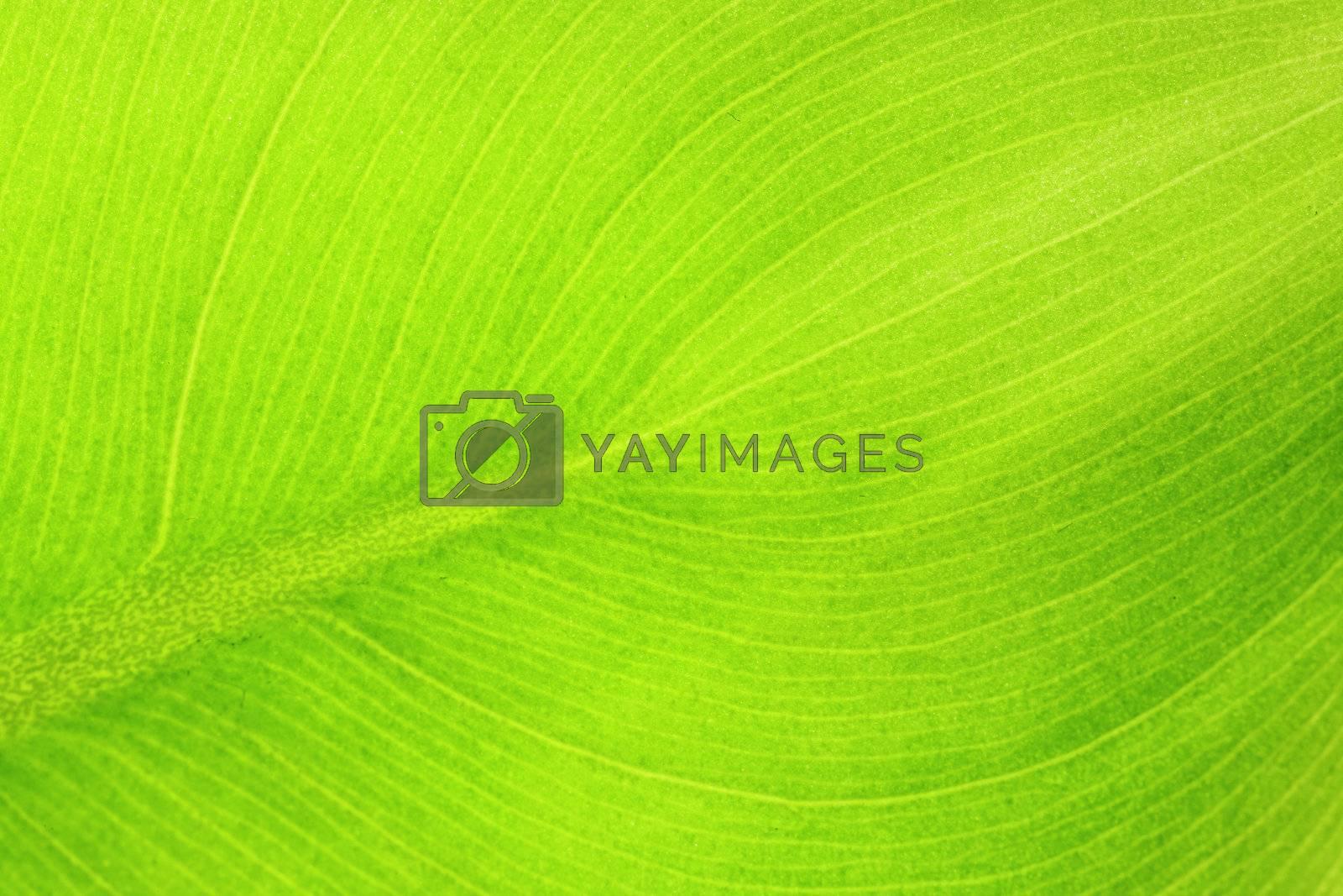 leaf details by leungchopan
