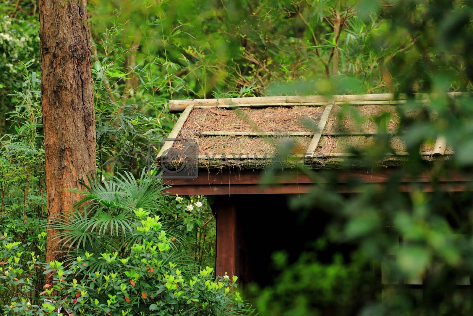Royalty free image of hut in wood by leungchopan