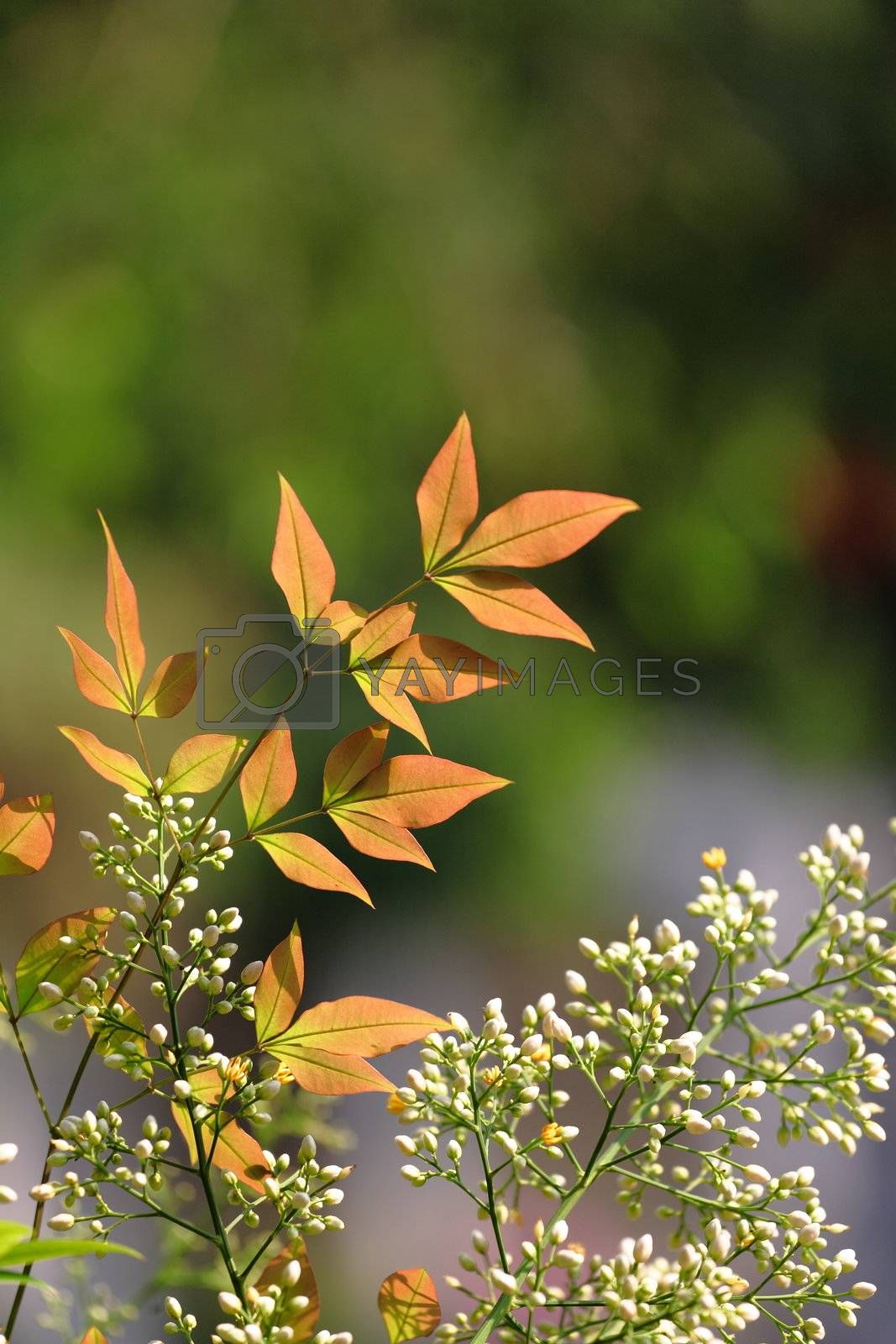 Royalty free image of orange color leaf in forest by leungchopan