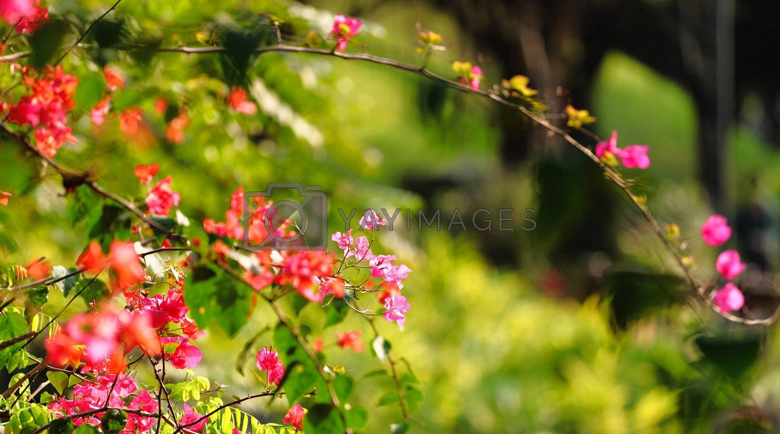 Royalty free image of flower in spring time by leungchopan