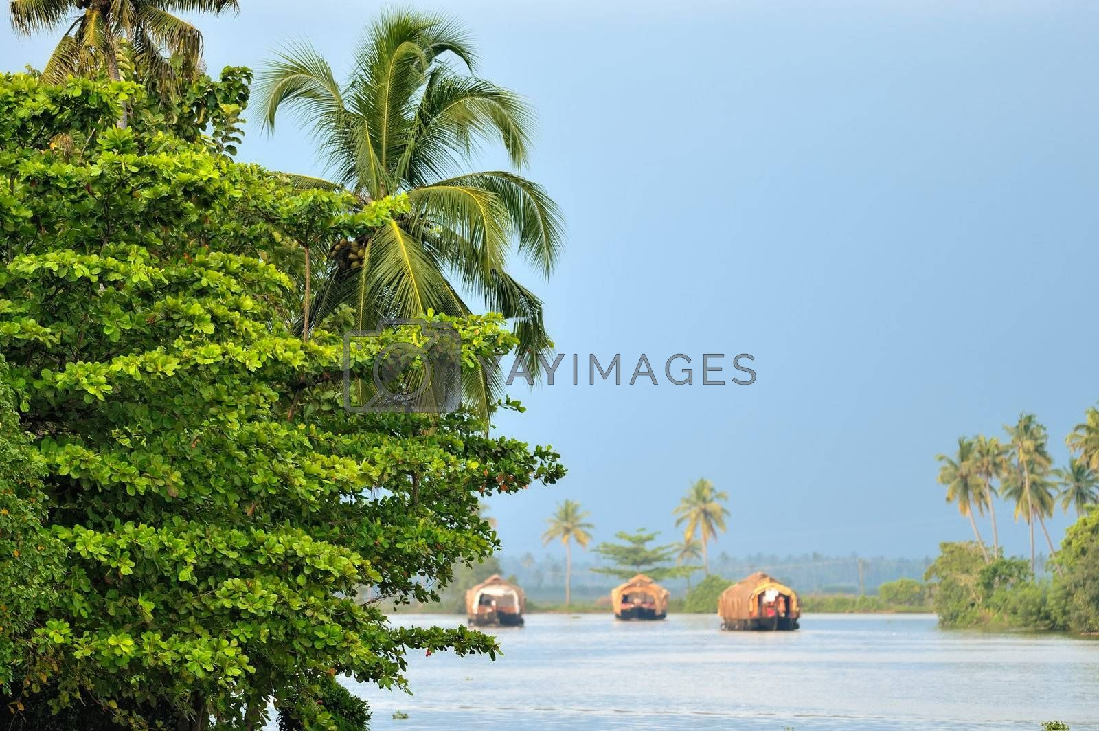 Royalty free image of Reed boats  by styf22