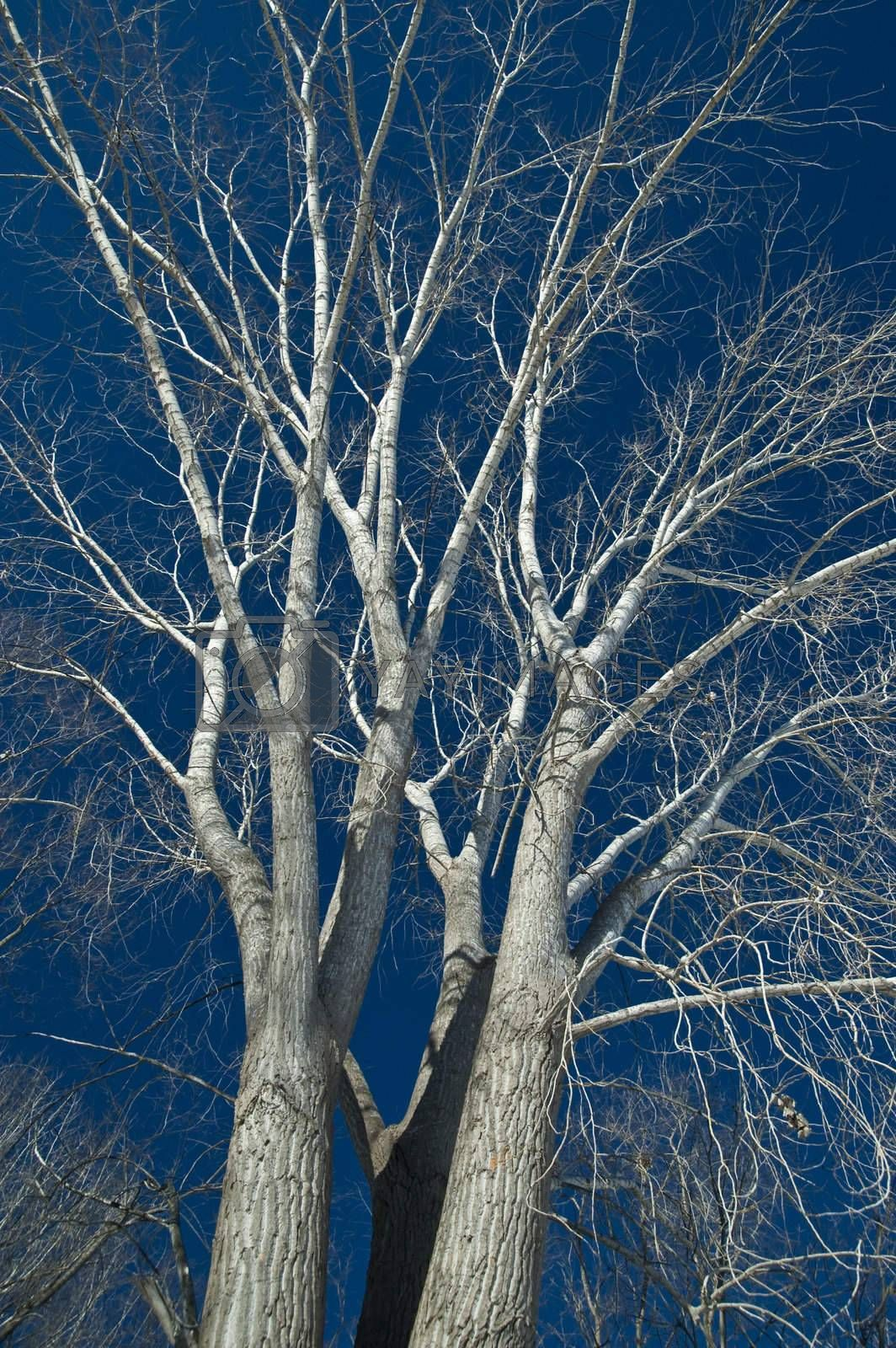 Royalty free image of Trees by vladikpod
