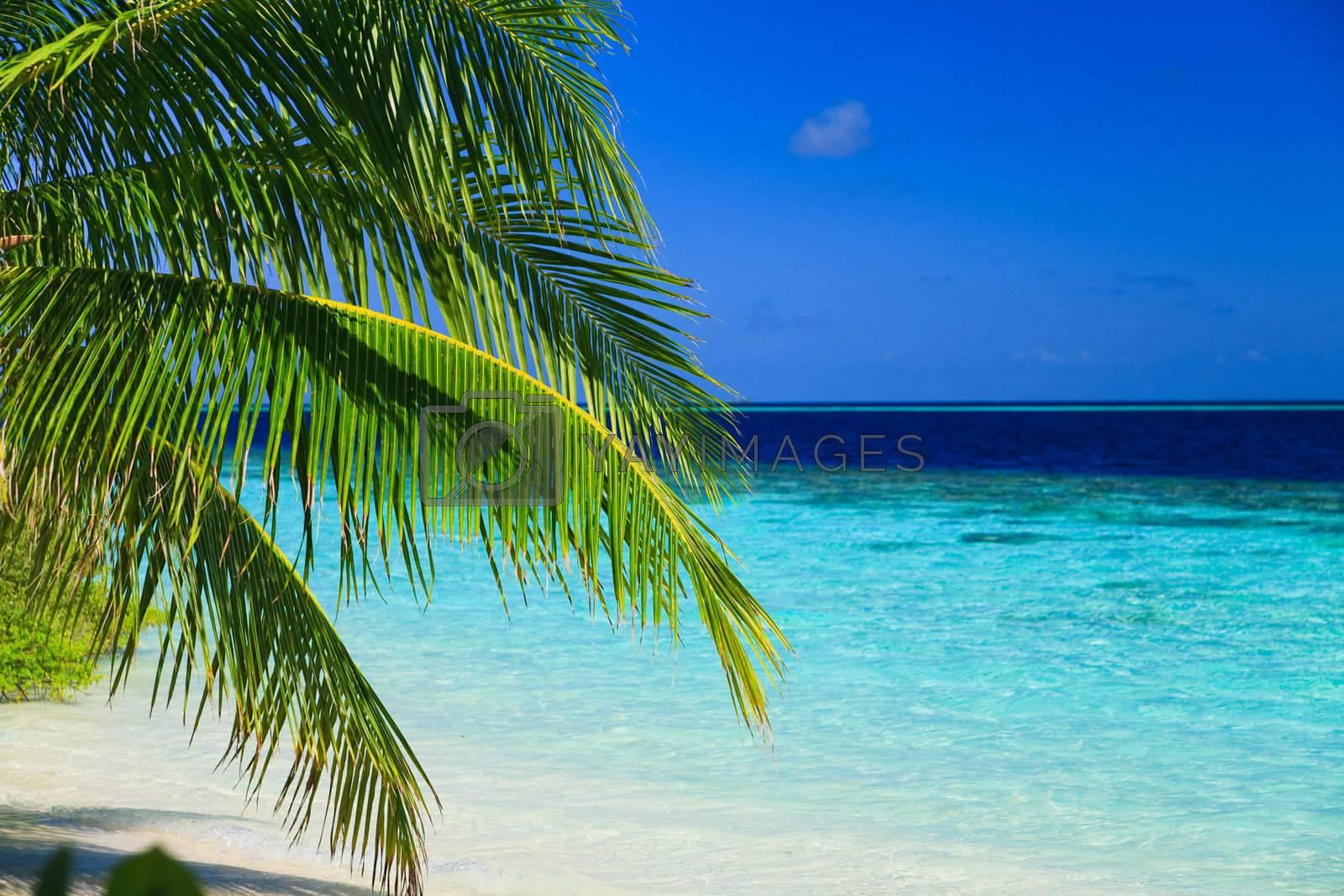 Royalty free image of Tropical Paradise at Maldives by anobis