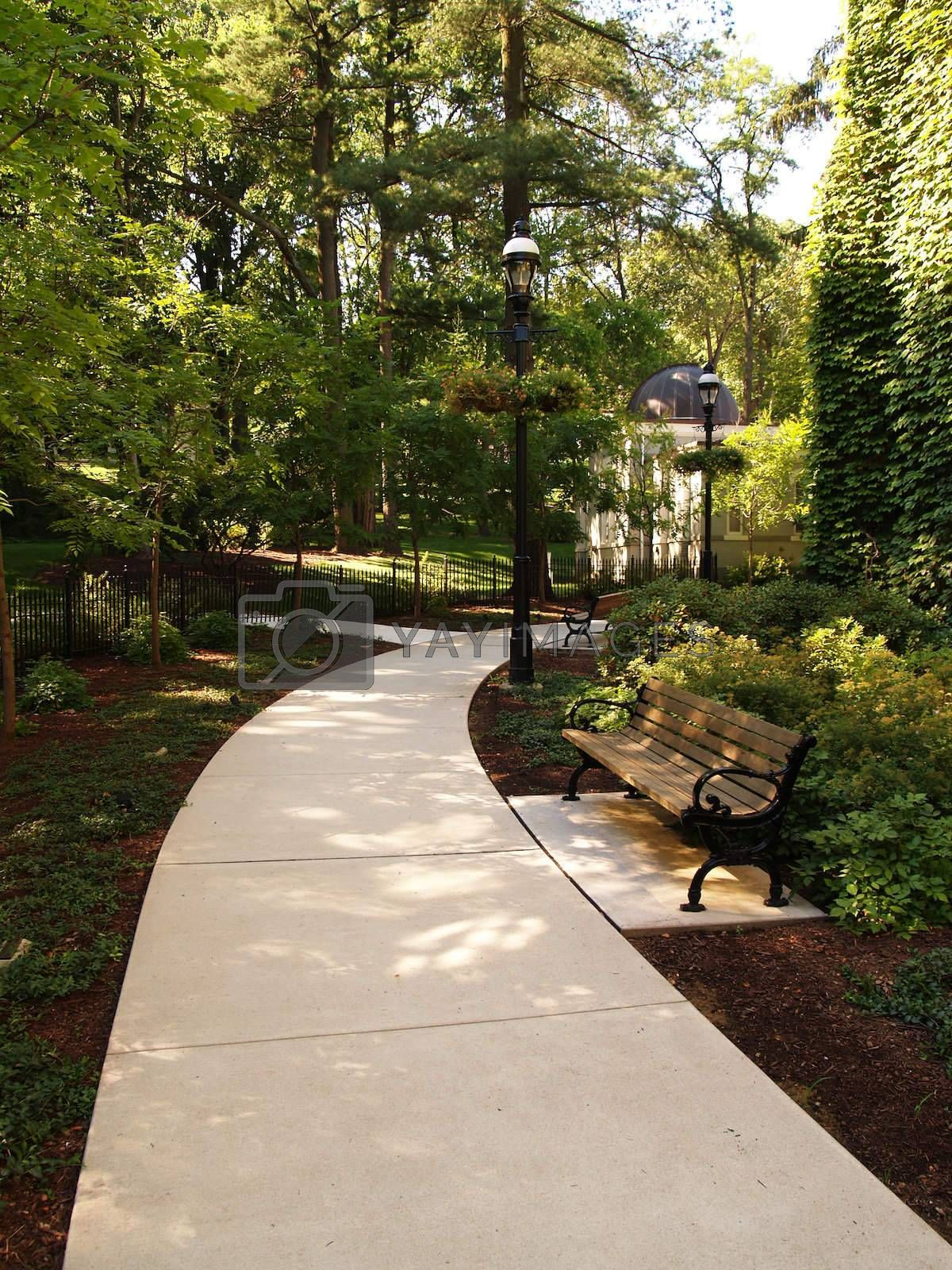 shady walkway and a park bench with many trees