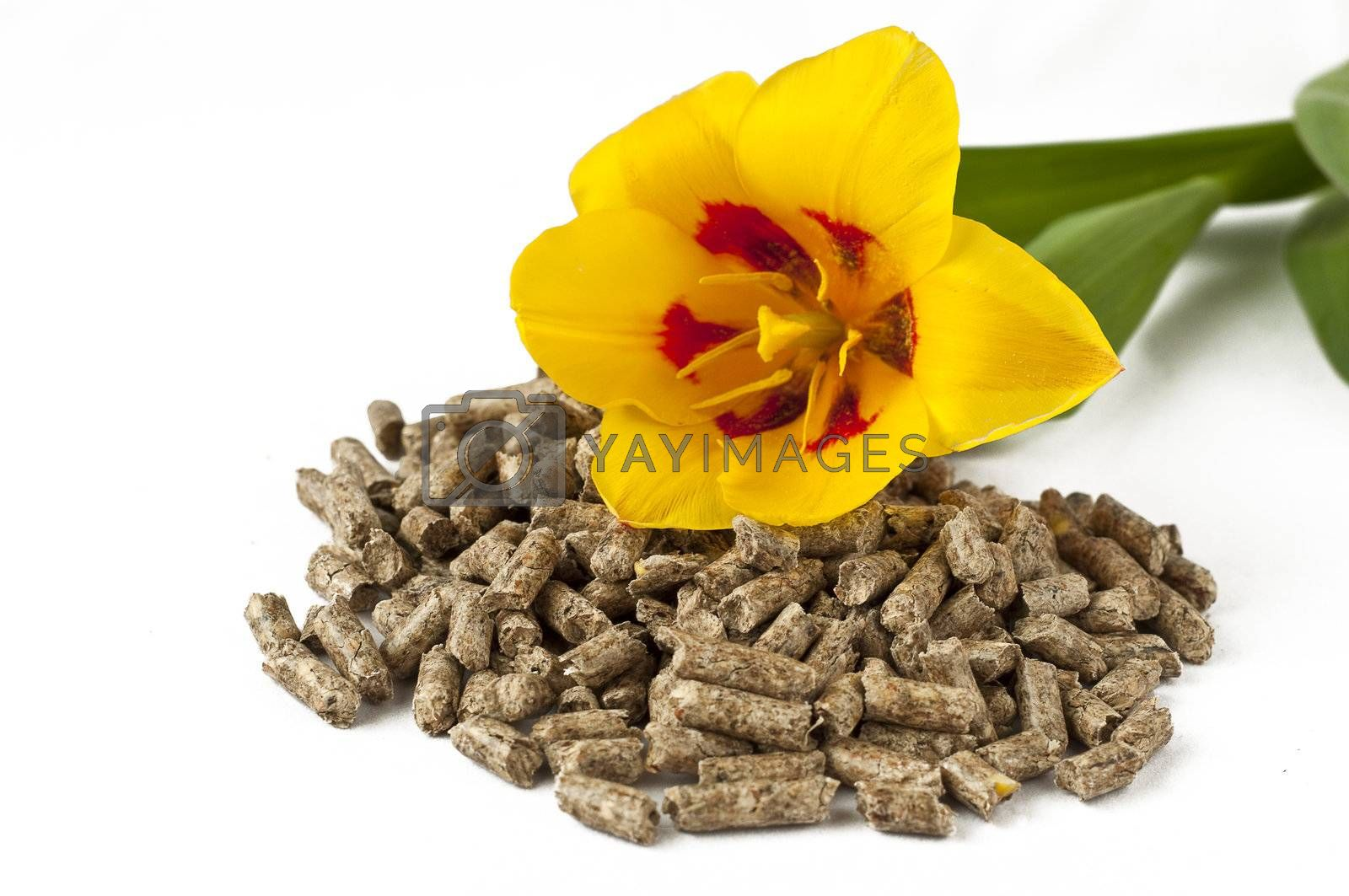 pellet and spring flowers on a white background