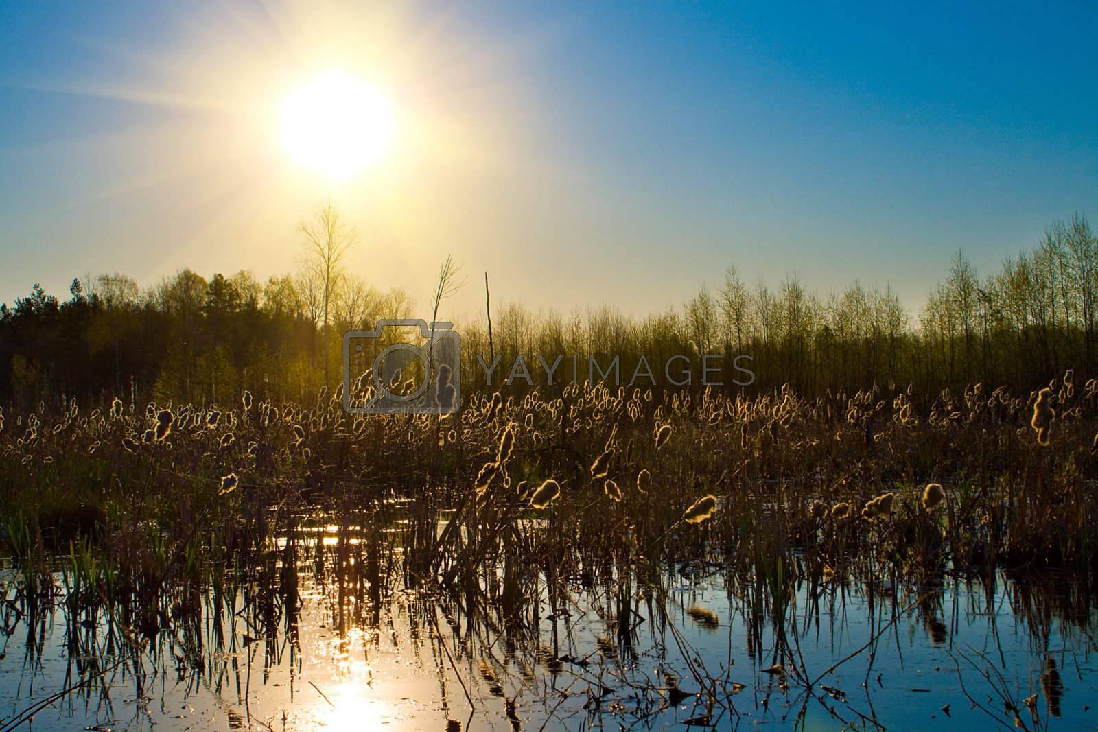 summer sun over forest lake