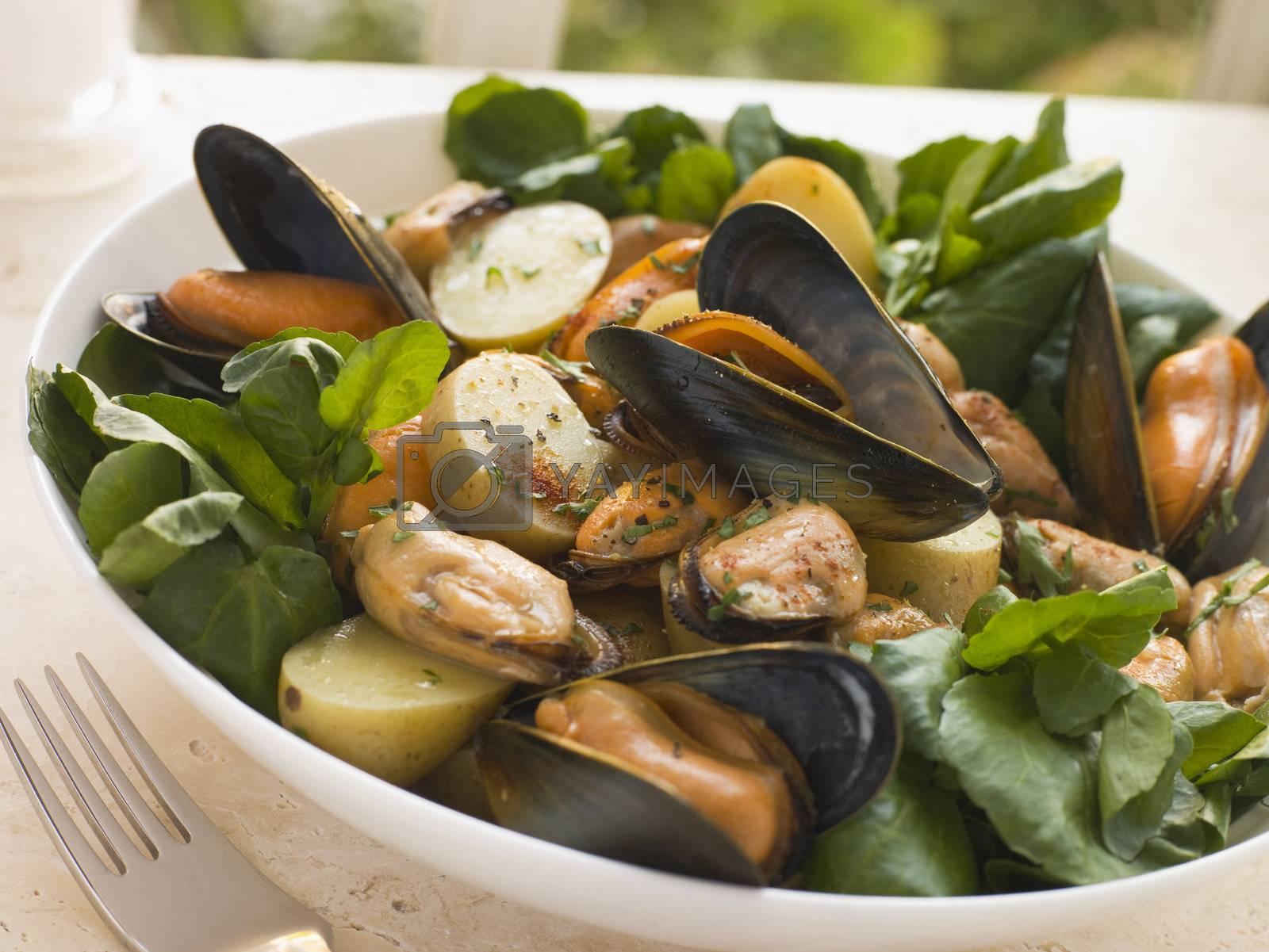 Mussel Watercress and Potato Salad by MonkeyBusiness
