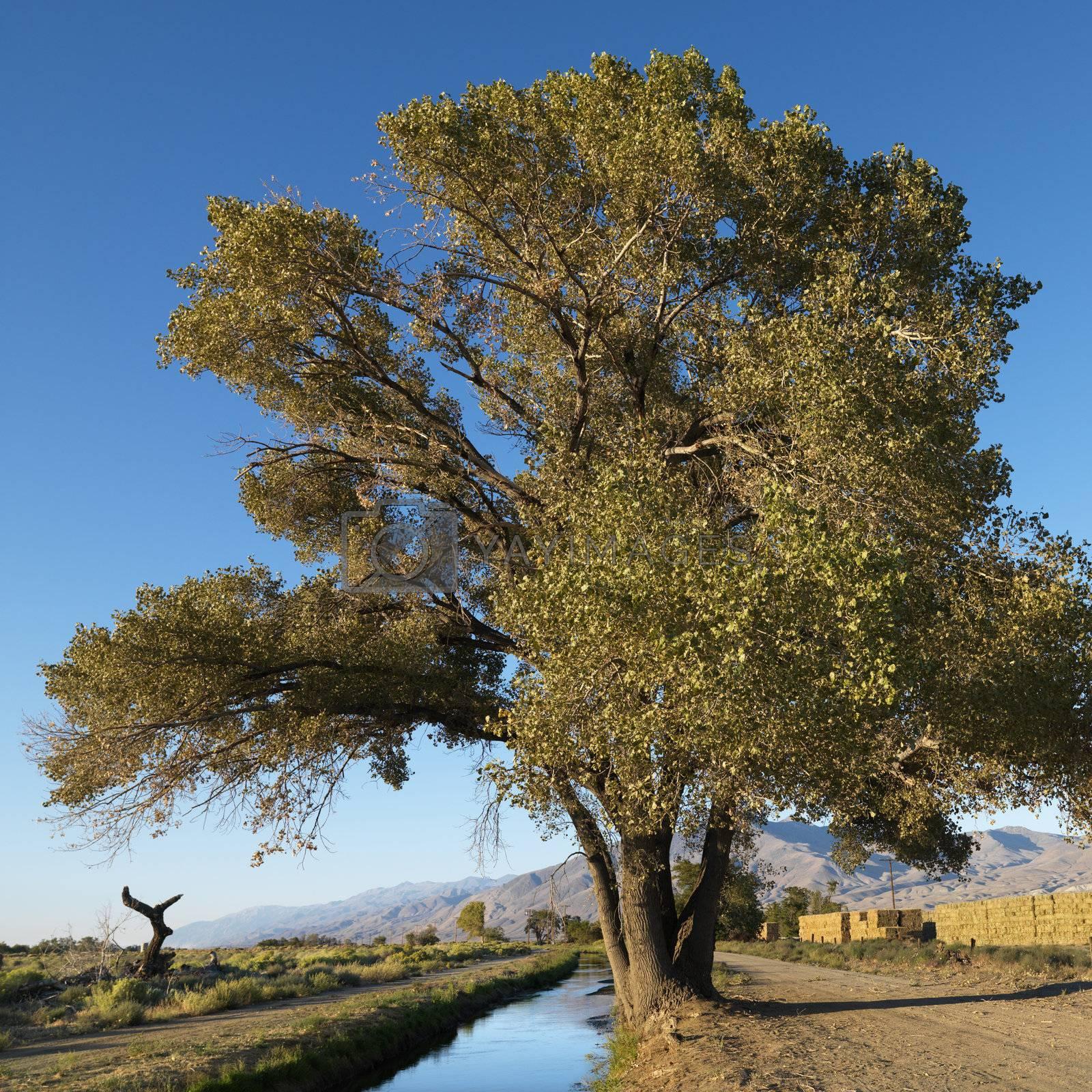 Tree by creek. by iofoto