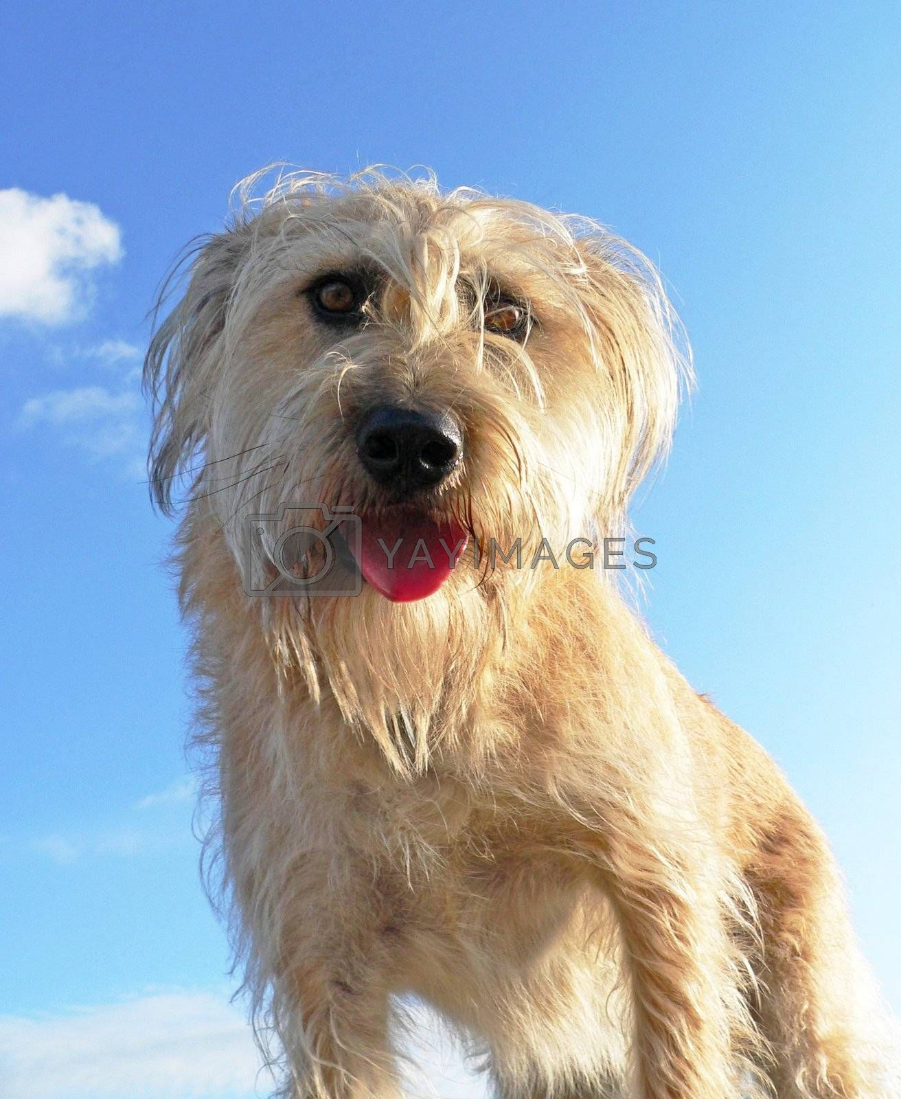 Young fluffy dog on blue sky background
