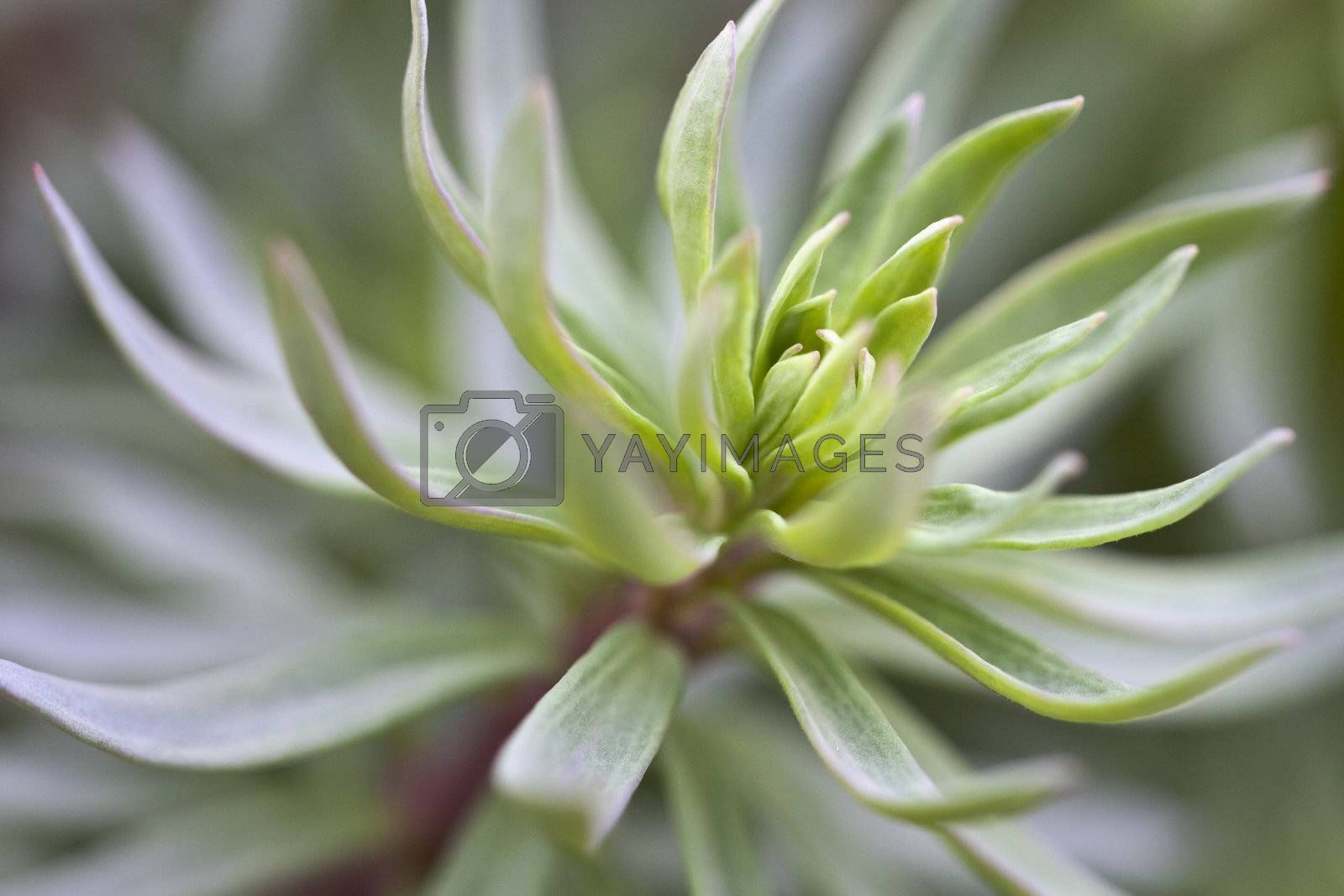 A photography of a beautiful green plant background