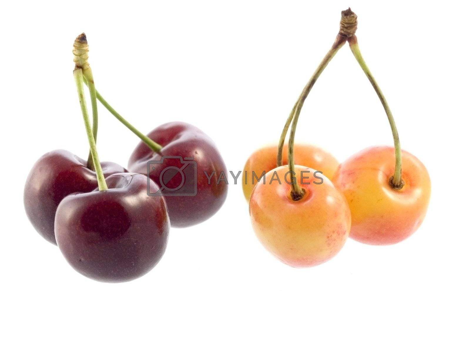 Close-up of sweet cherries isolated on white