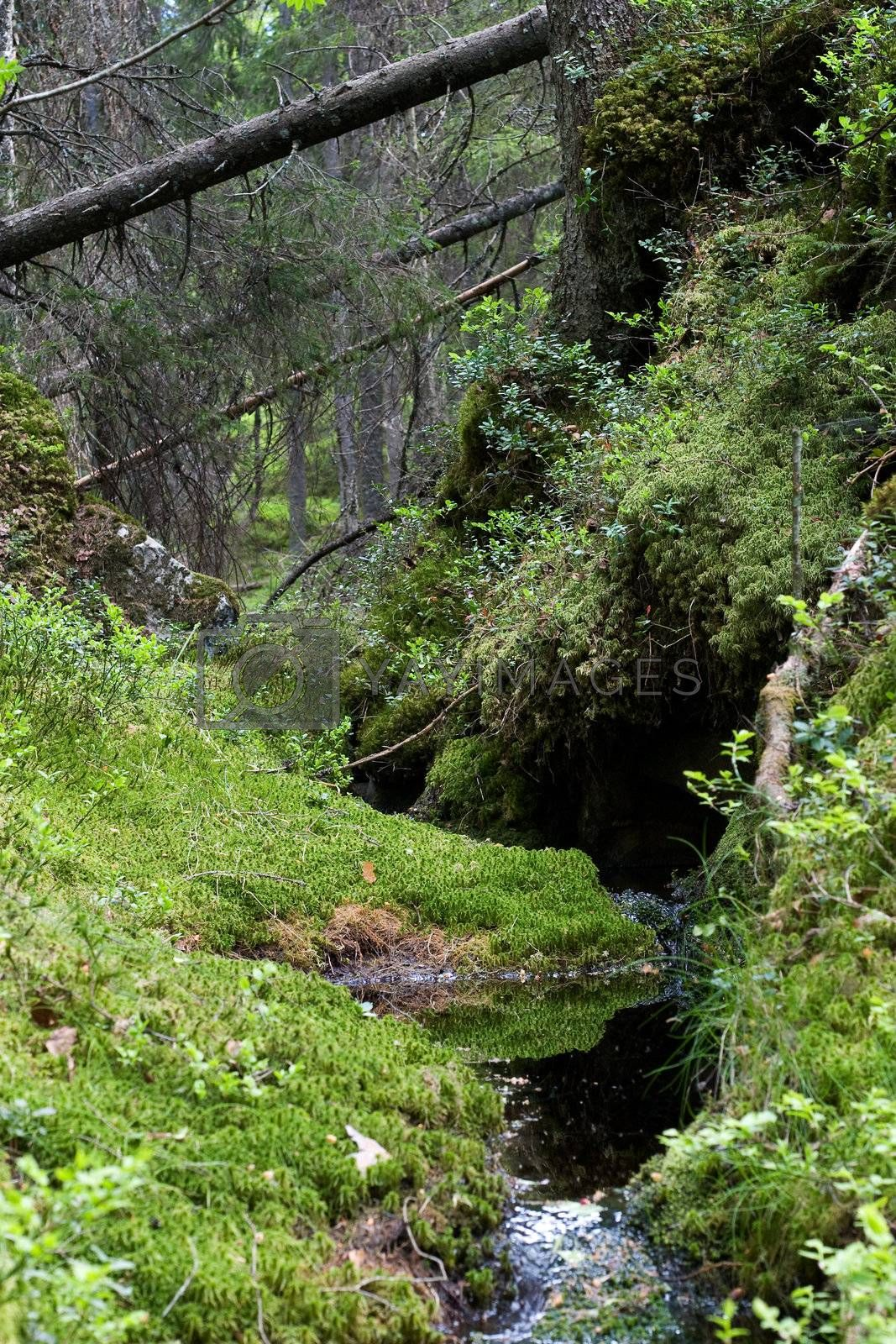 A view of a dense forest with little stream