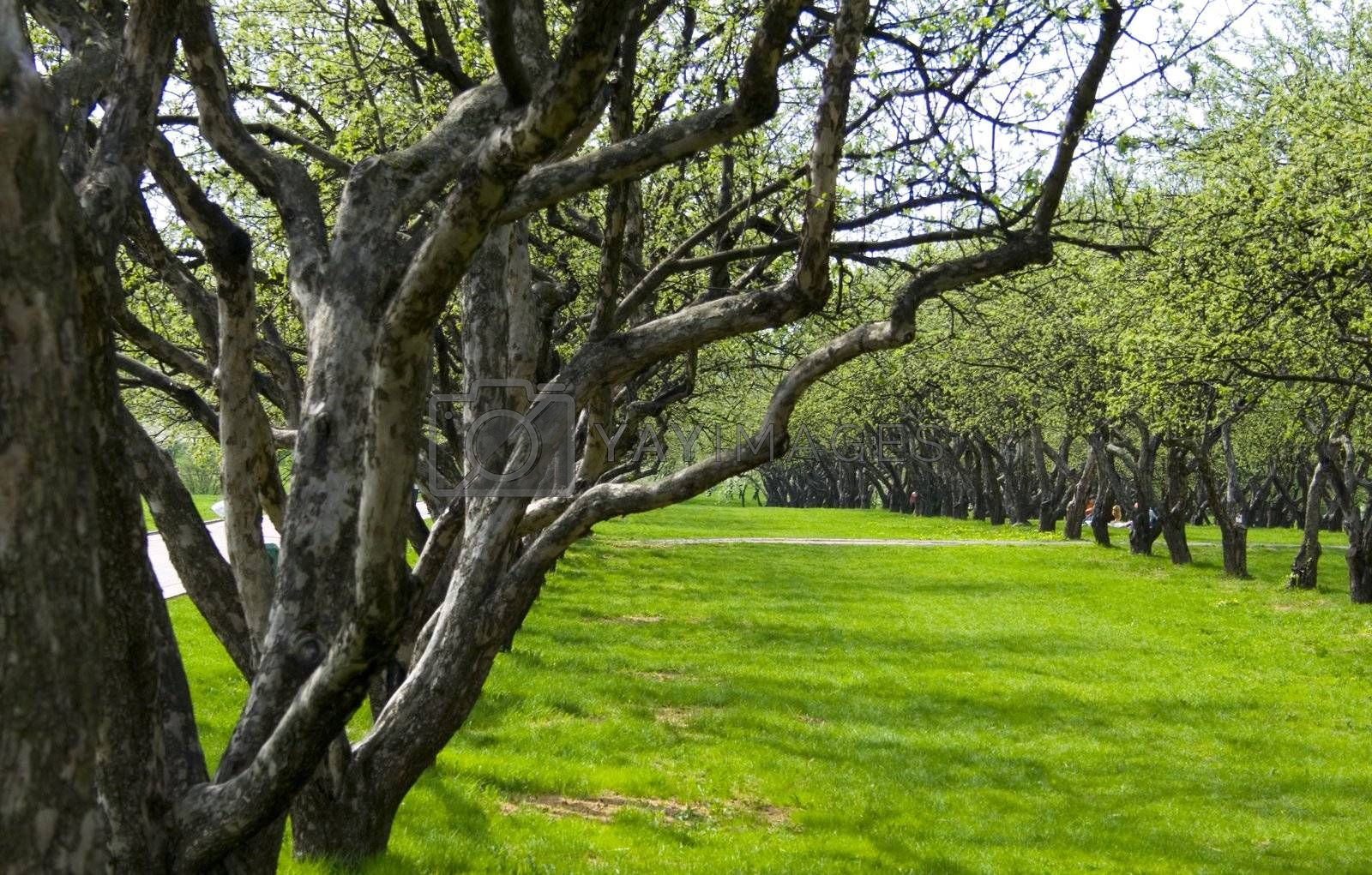 spring garden with green grass