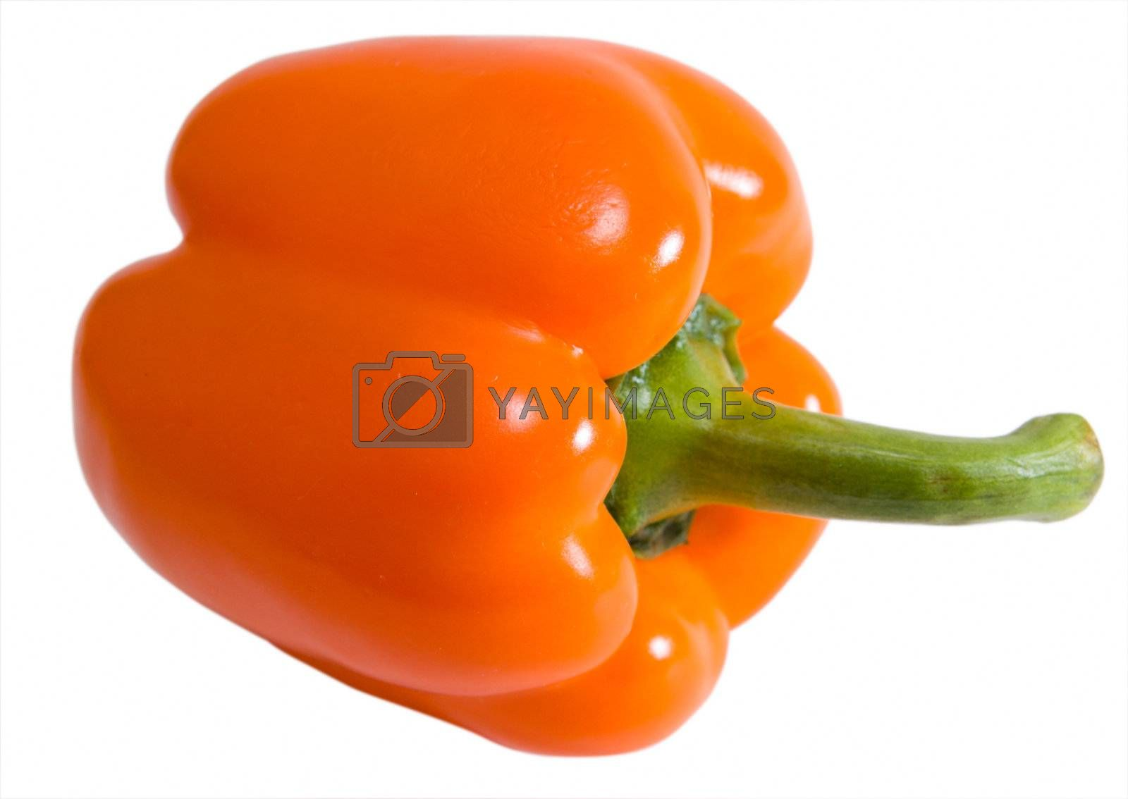 The red pepper isolated on a white background.