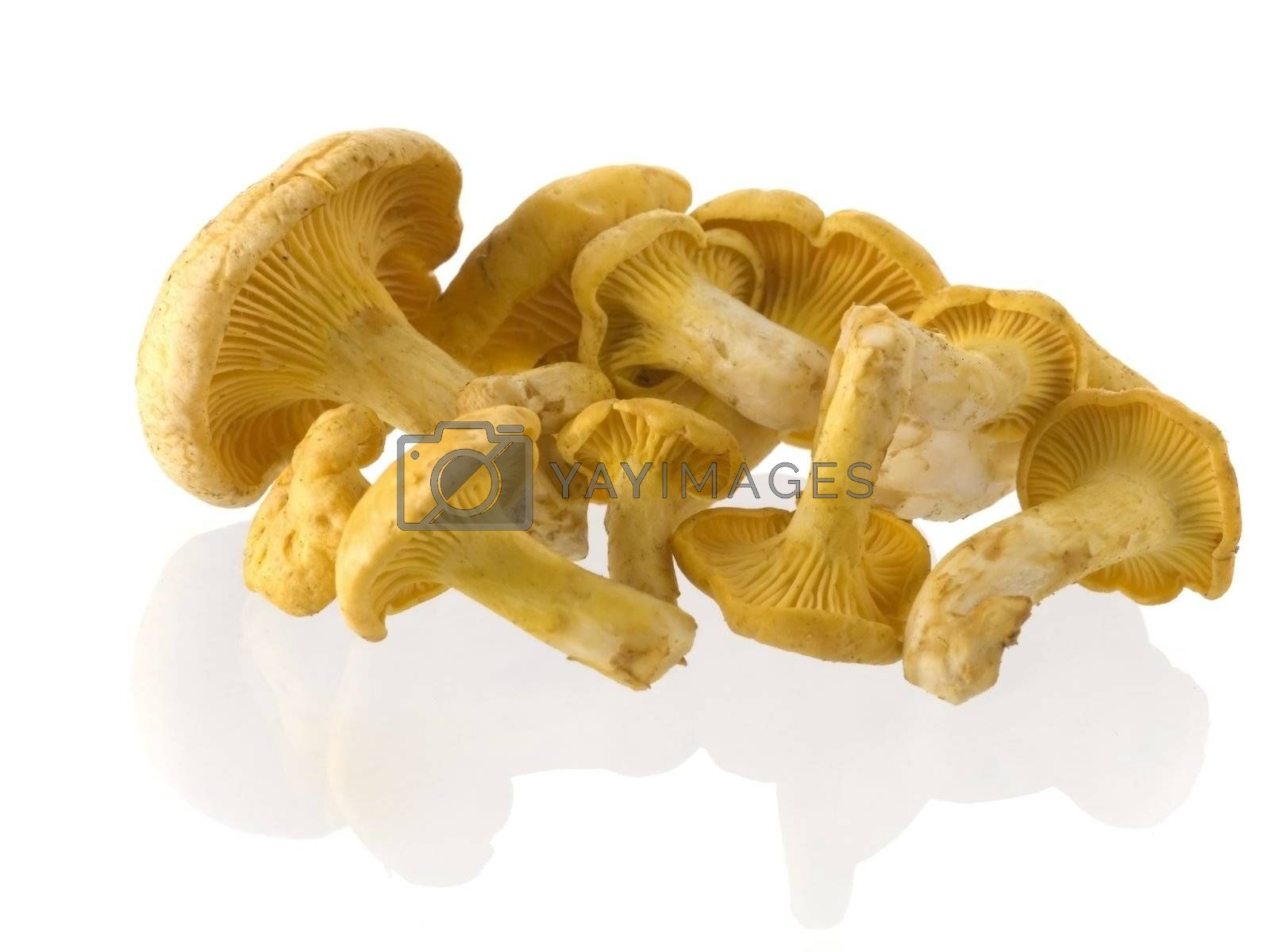 Group of edible mushrooms isolated on white background