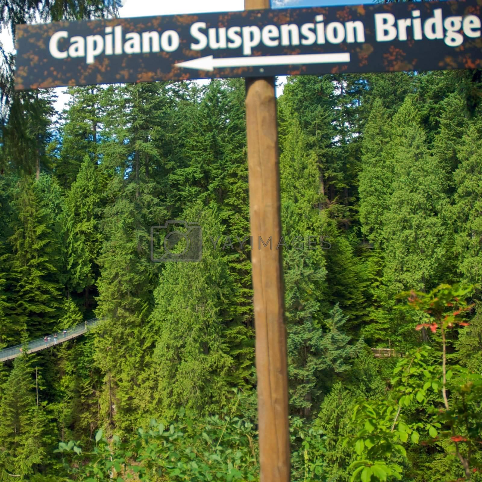 Capilano Suspension Bridge in Vancouver, British Columbia, Canada