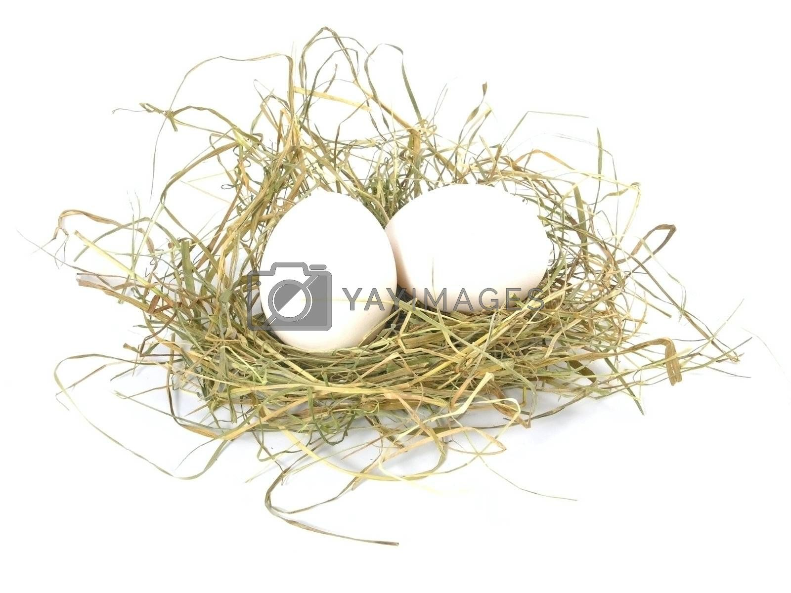 two eggs  in nest isolated on white background